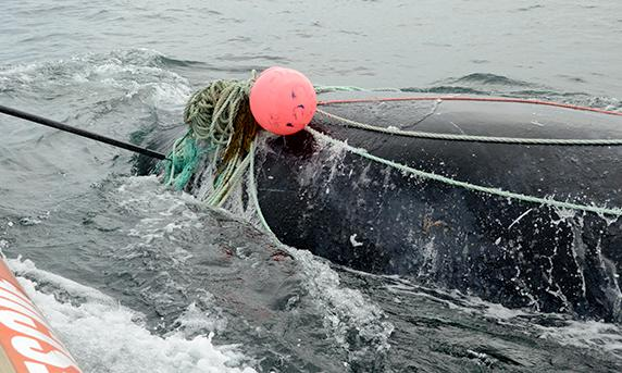 Canada fisherman killed by whale moments after rescuing it from net