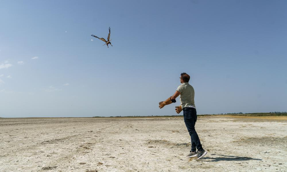 A rehabilitated long-legged buzzard is returned to the wild over Lake Van, Turkey