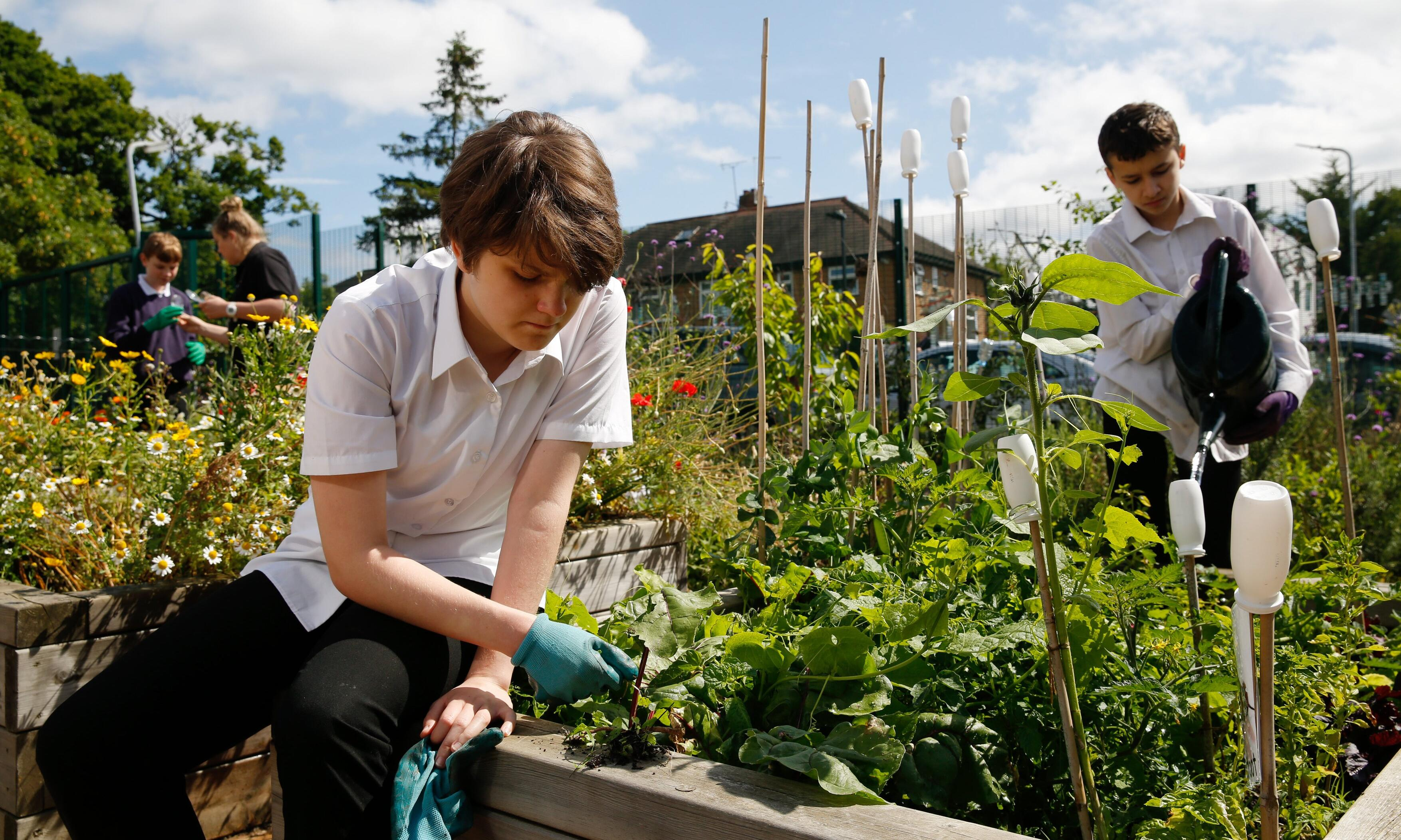 Weeding, writing and arithmetic… why green fingers are good for our children