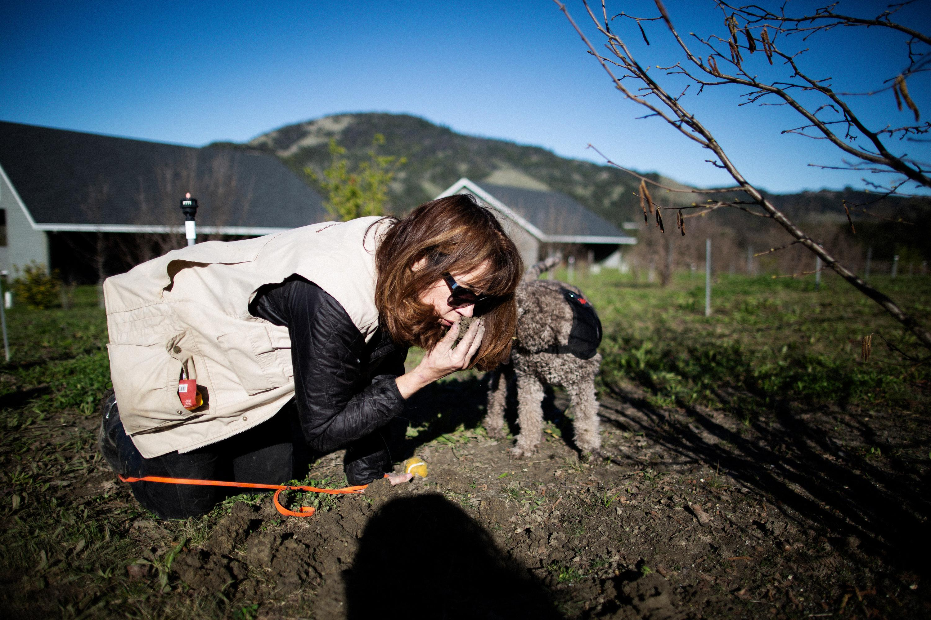 The hunt for black gold: is California the world's next truffle hotspot?