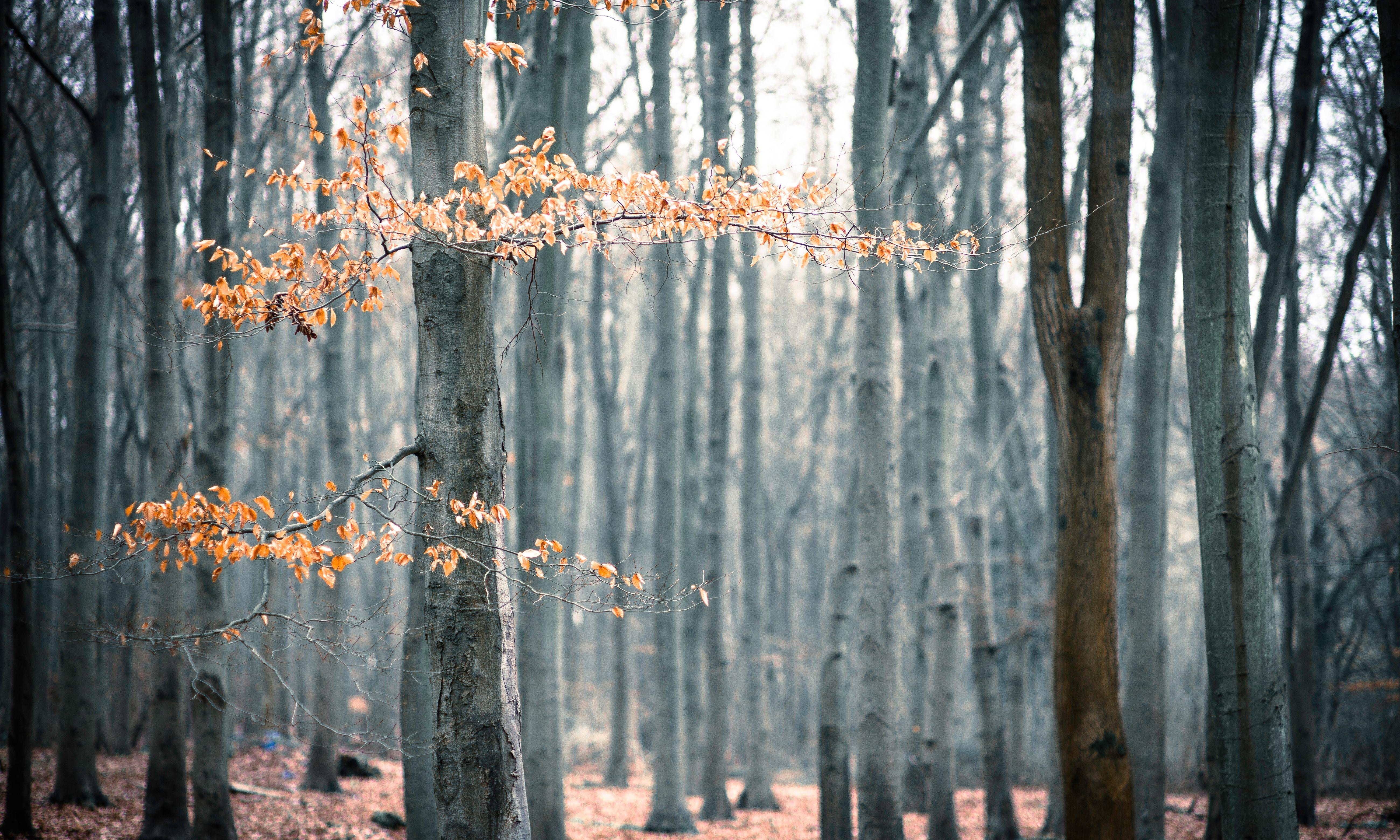 The Guardian view on the climate emergency: forests can help to save us