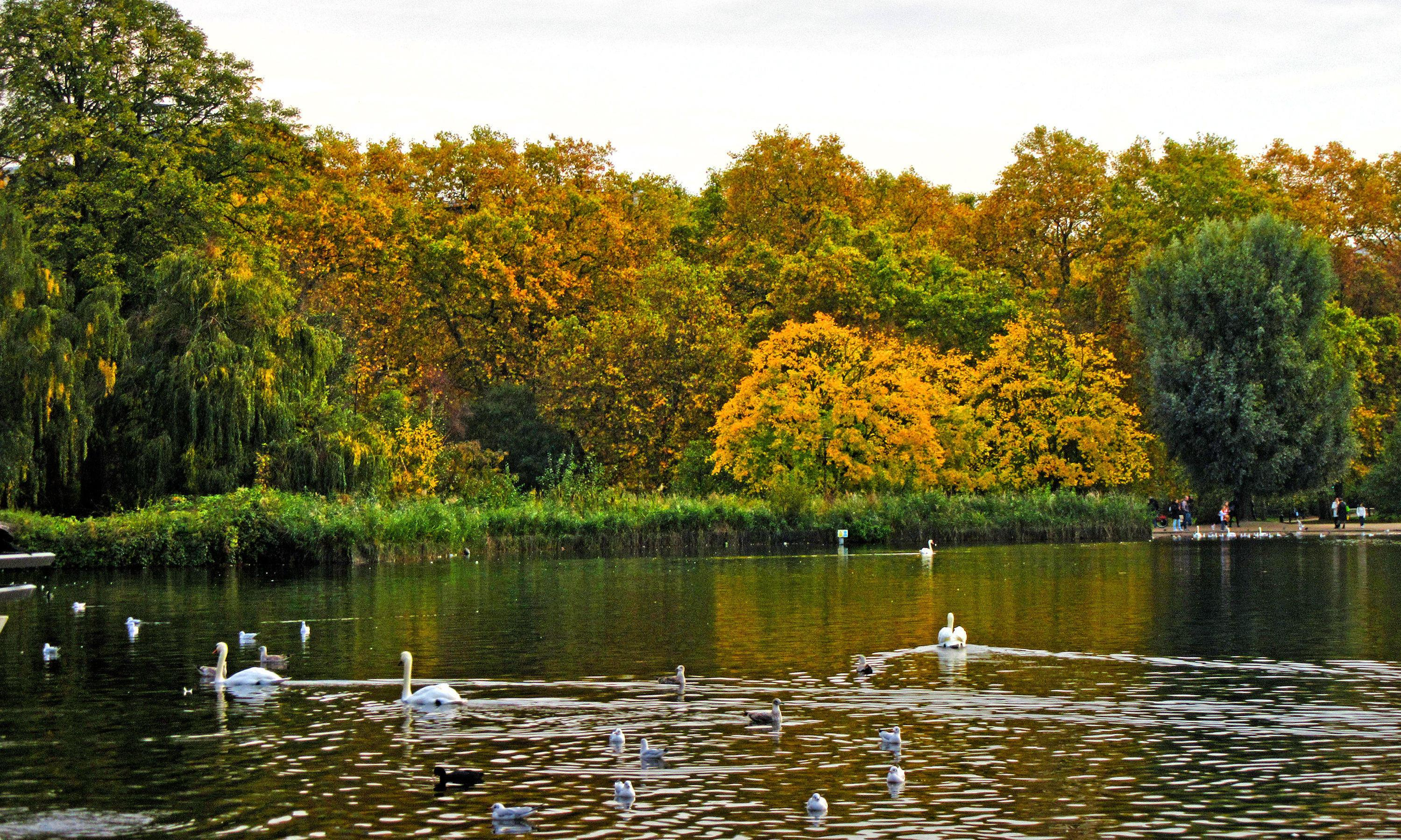 Country diary: swans throw their weight among feeding birds