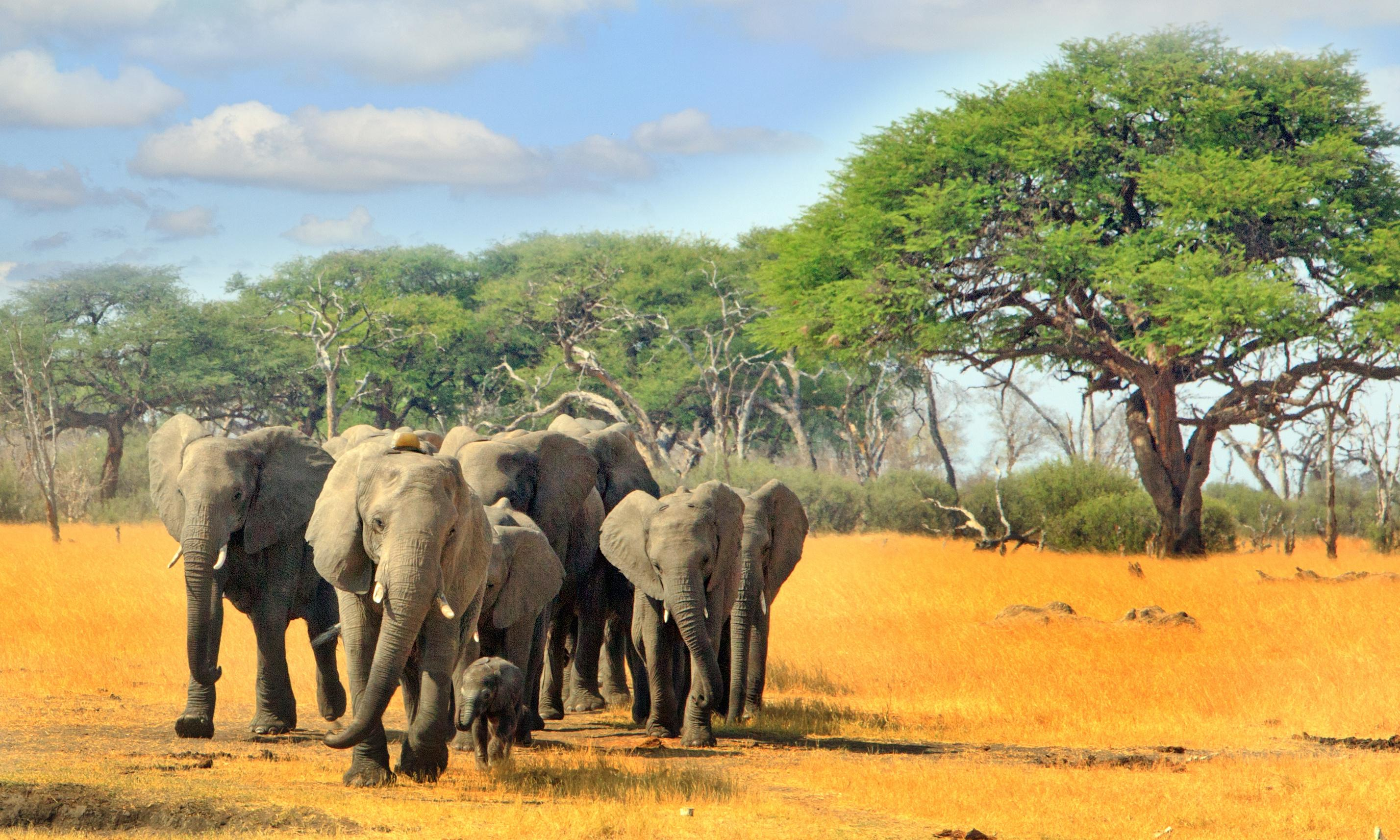 The five: endangered species in line for a boost to their protection