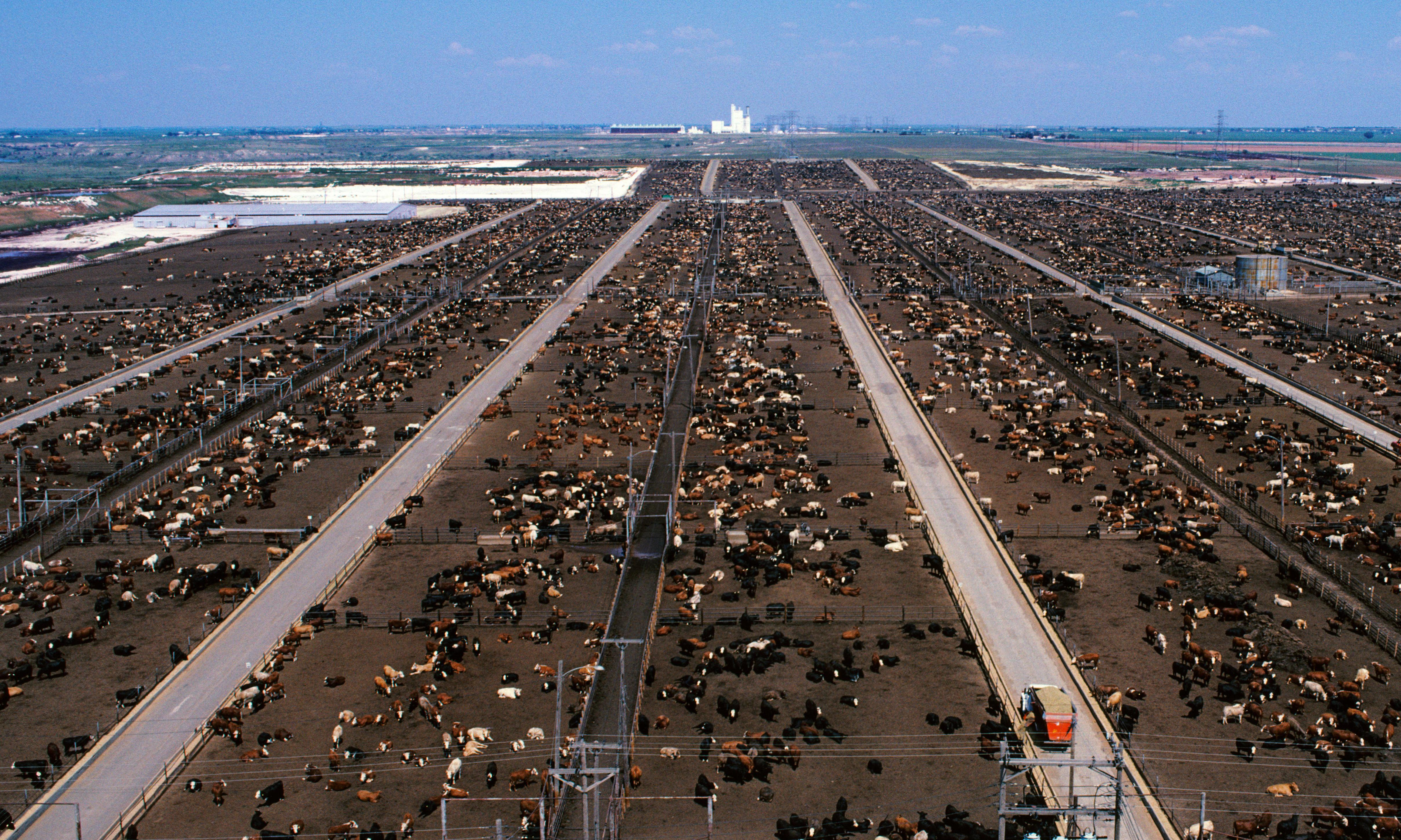 The price of plenty: how beef changed America