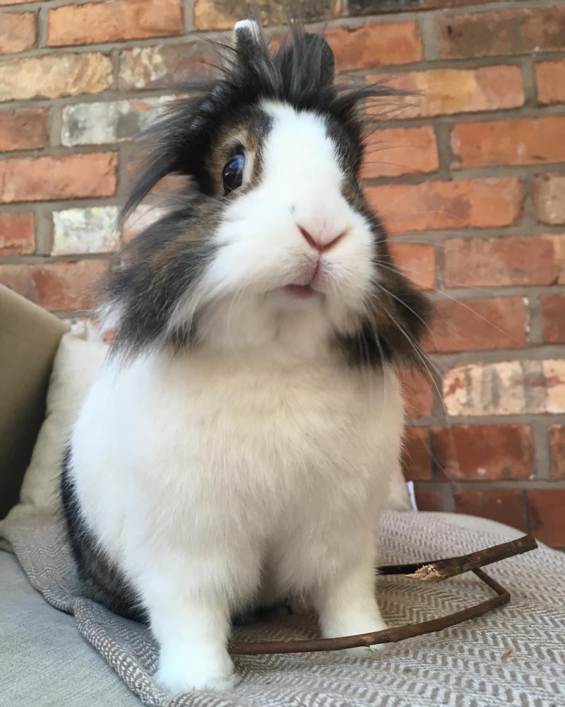 'Super-spoilt' rabbit Olive.