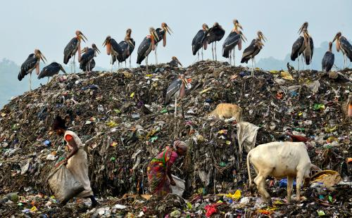 Greater adjutant storks perch as waste pickers collect usable items from a dump on the outskirts of Guwahati, the biggest city in Assam, northeast India