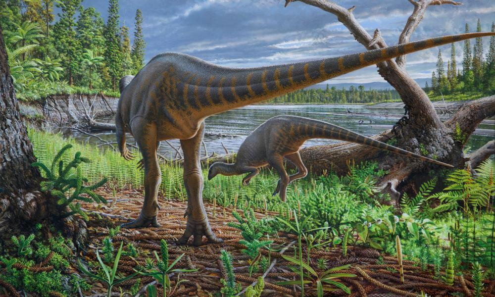 Artist's impression of Diluvicursor Pickeringi dinosaur, which ran on strong hind legs and weighed 3 or 4 kilos.