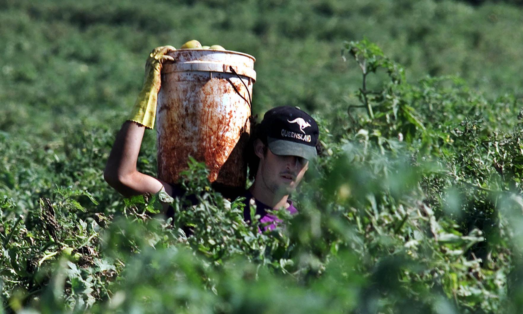 #88daysaslave: backpackers share stories of farm work exploitation