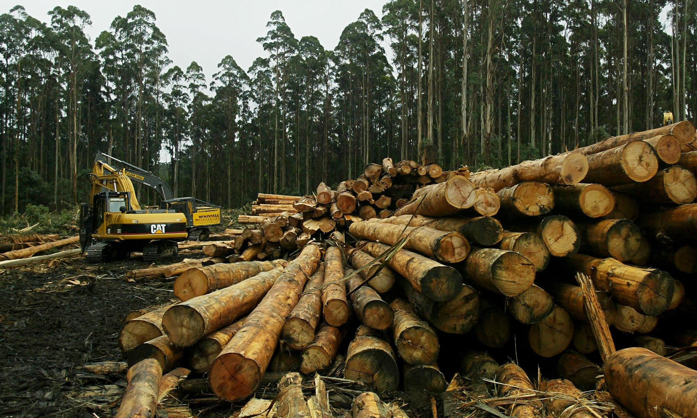 Melbourne loses 15bn litres of water annually from logging catchment, study finds