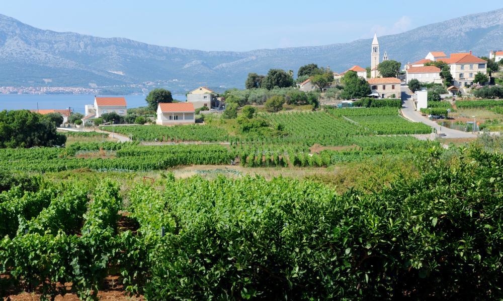 Vineyards at Lumbarda.