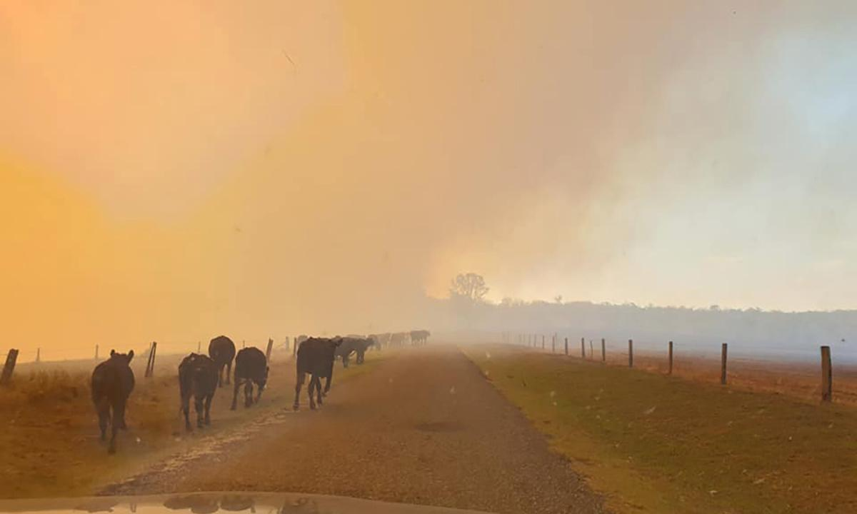 Bushfires in northern New South Wales may have destroyed up to 30 homes