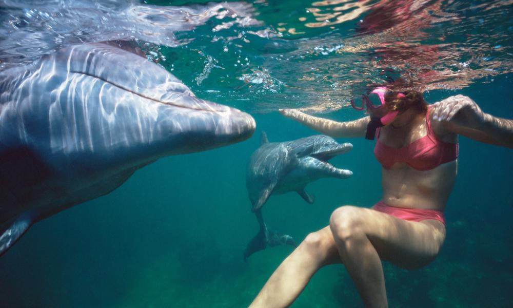 Woman swimming with dolphins.