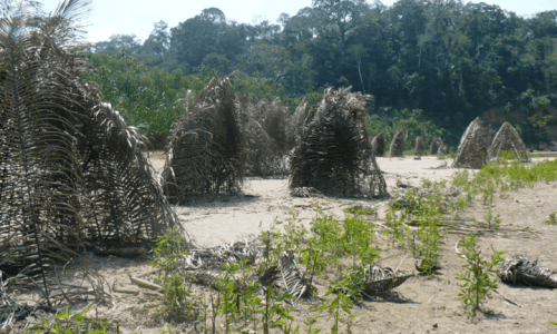"""Houses built by the """"Mashco-Piro"""", one of numerous indigenous peoples living in """"isolation"""" in the south-east Peruvian Amazon."""