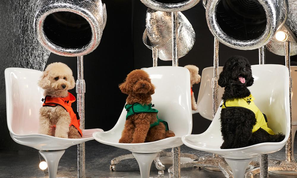 Moncler poldo dog couture.