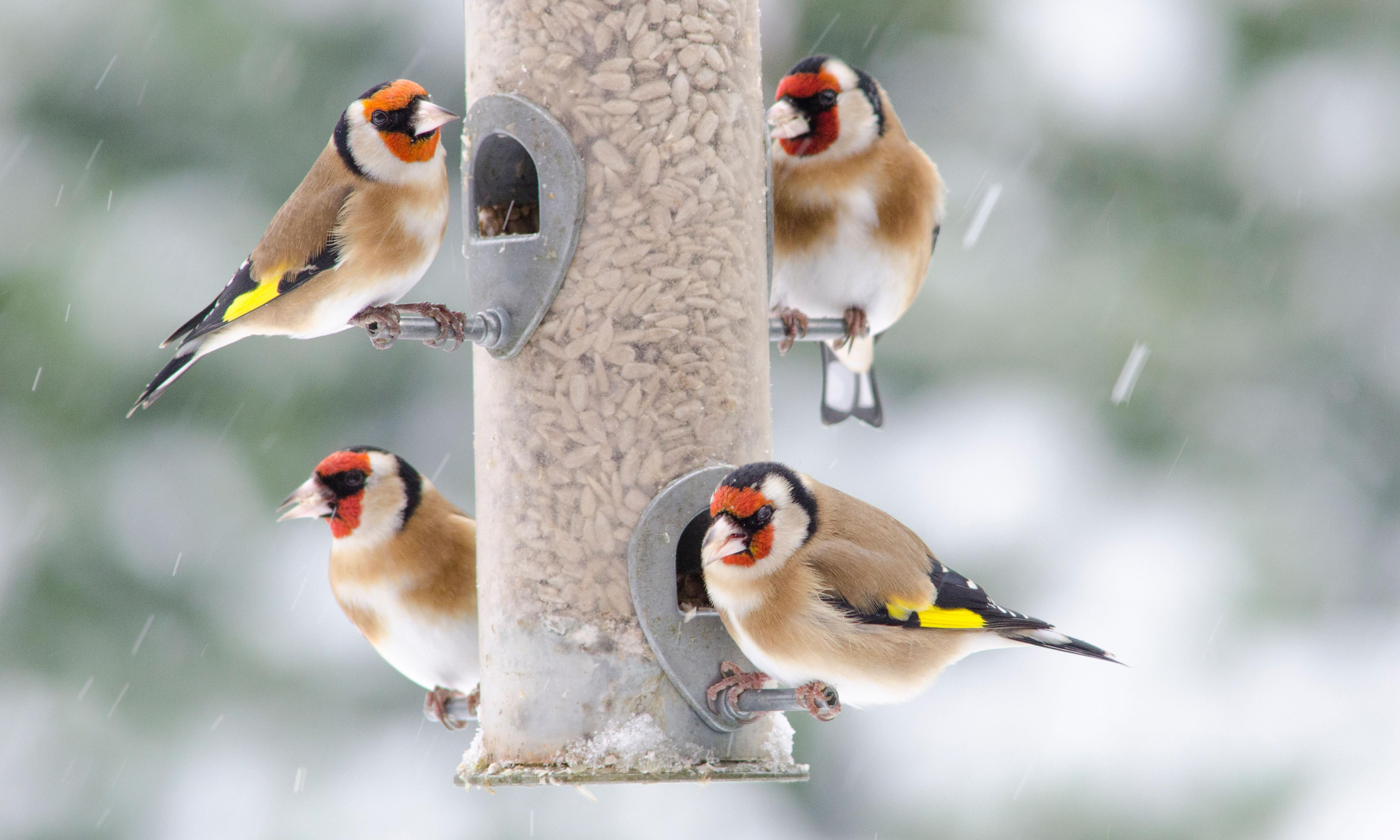 Garden feeders are supporting rising numbers of urban birds