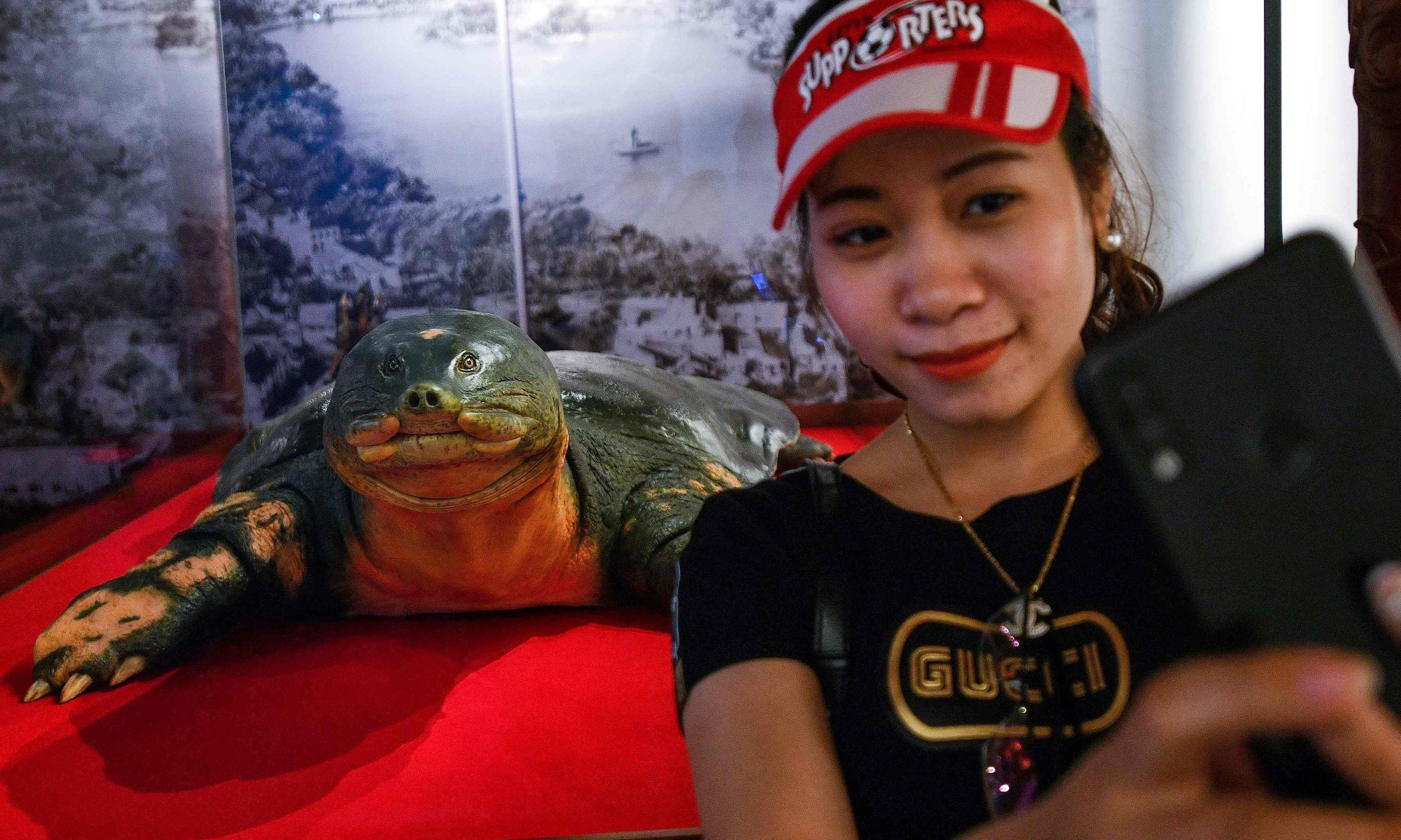 Sacred giant turtle gets embalmed in Vietnam