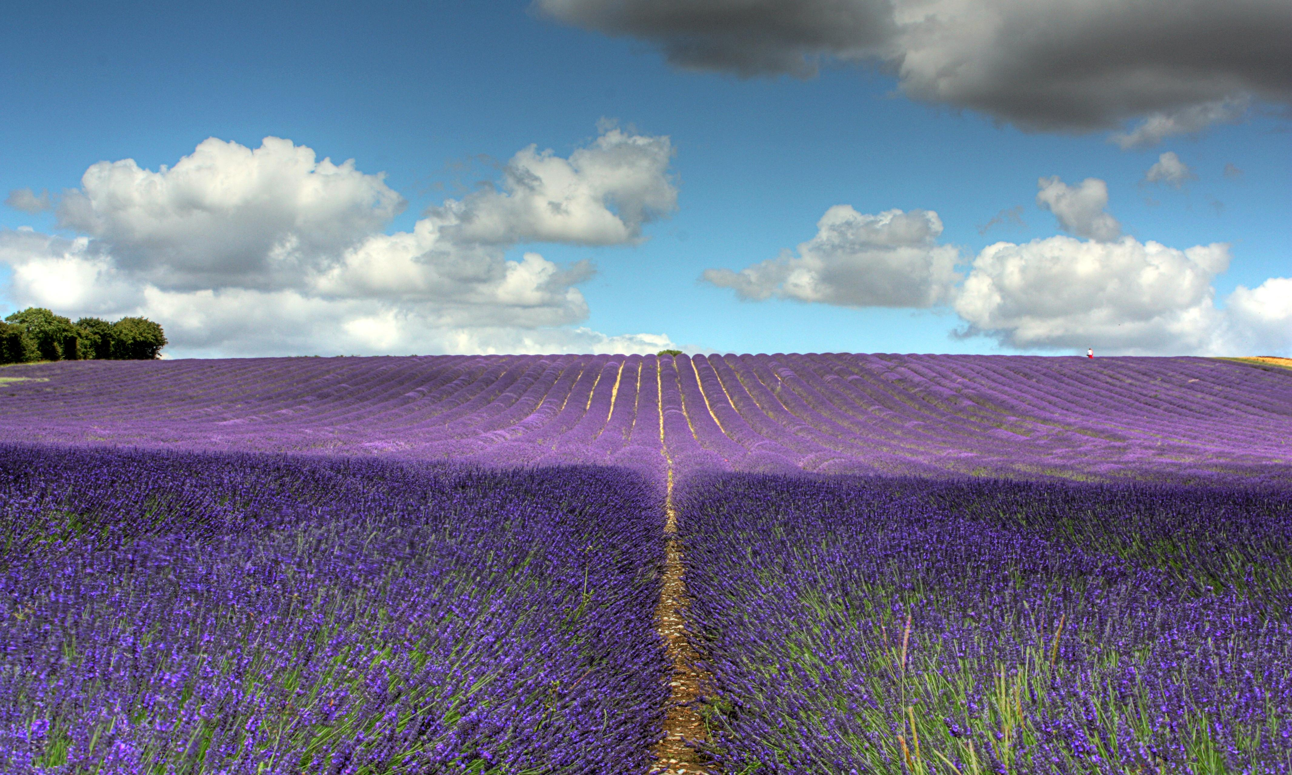 Hitchin Lavender, Hertfordshire: 'Kids will be in awe of the surroundings' – review