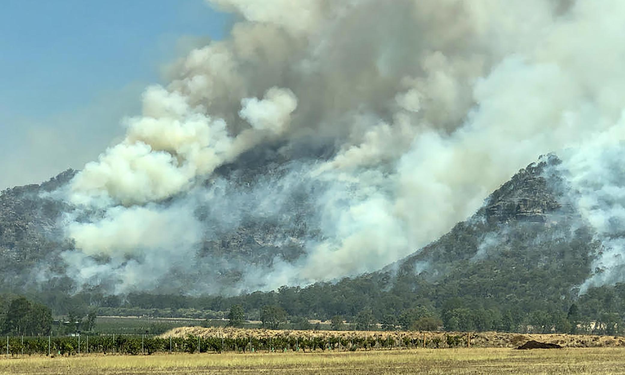 No vintage: Australian vineyards dump grape harvest as bushfire smoke takes its toll