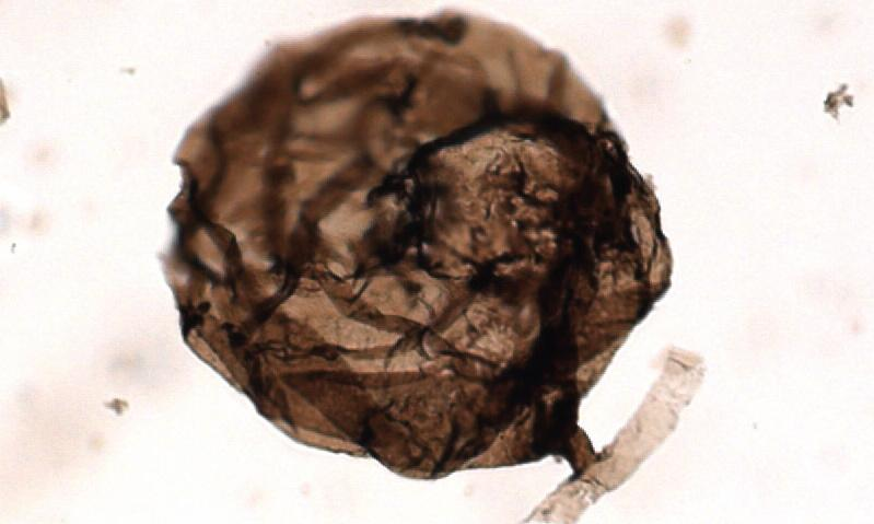 Canadian Arctic fossils are oldest known fungus on Earth