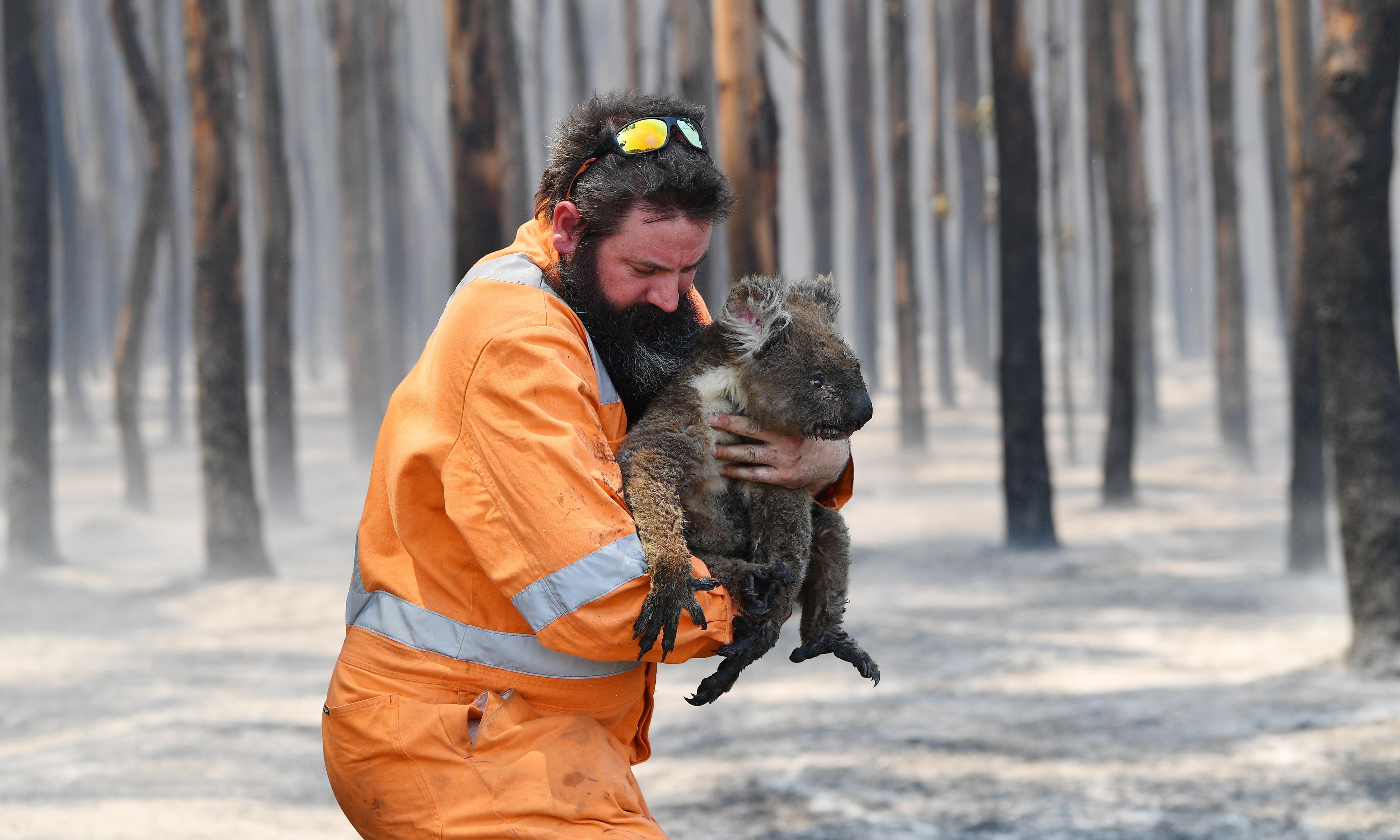 Kangaroo Island bushfires: grave fears for unique wildlife after estimated 25,000 koalas killed