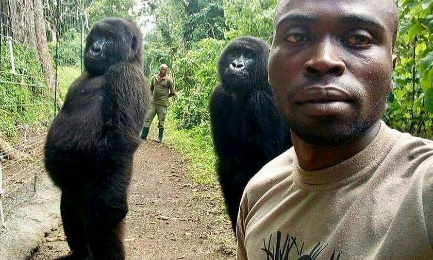 'Gorilla selfie': Congolese ranger tells how he snapped viral photo