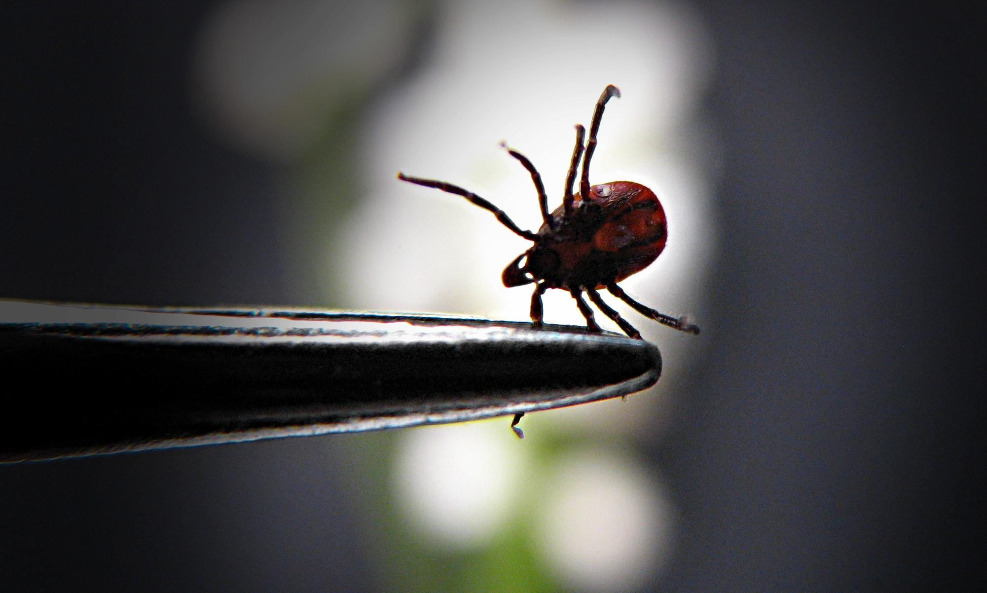 What's really behind the spread of Lyme disease? Clue: it's not the Pentagon