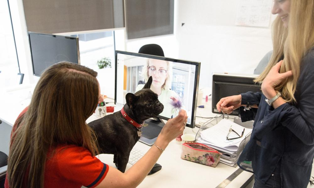 pet dogs are the new must have accessory at the smarter office