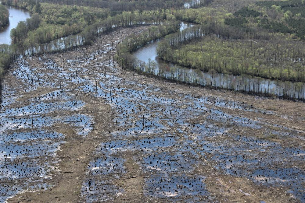 An aerial view of a clearcut section of a hardwood forest along the Nottoway River in Virginia, 2019.