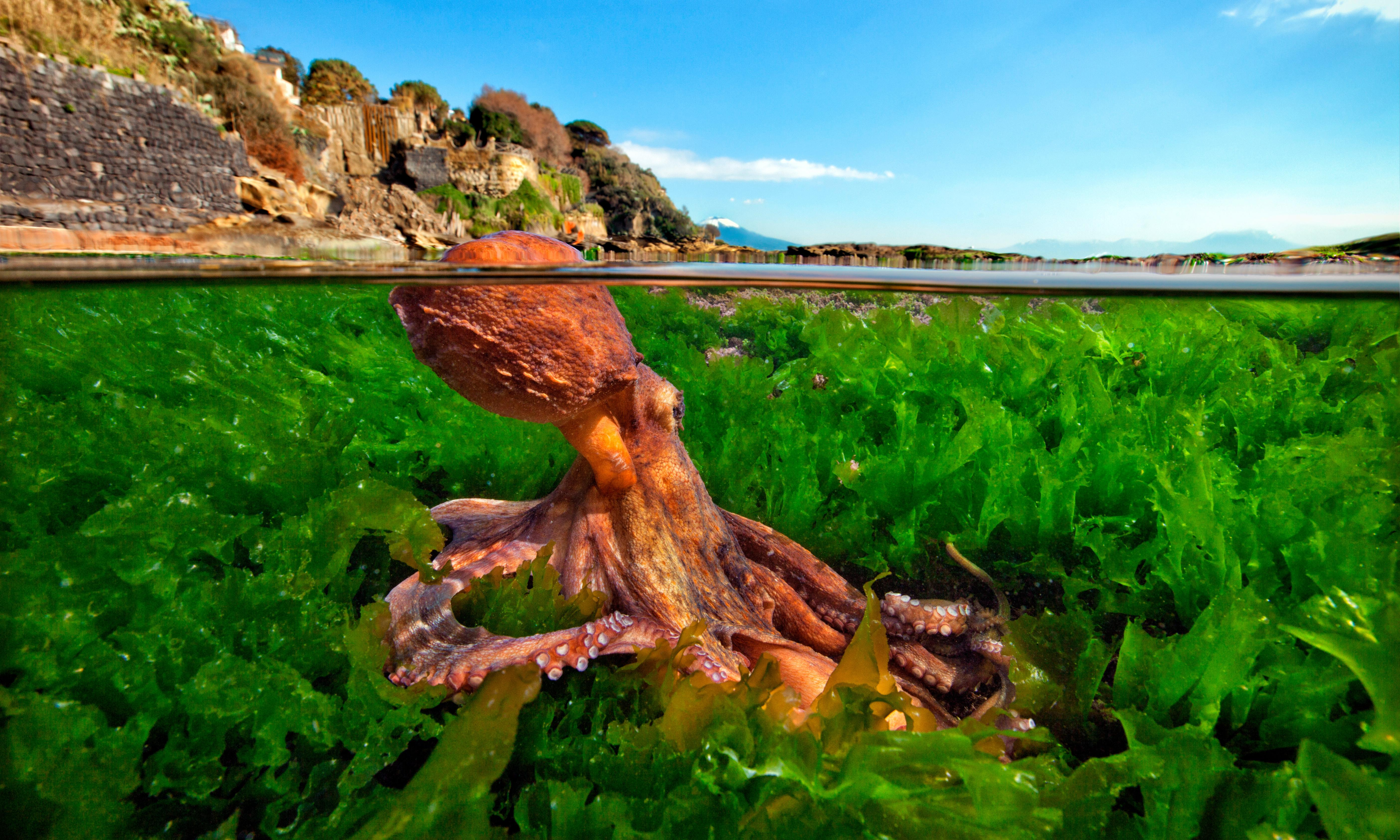 Why are attitudes to meat so complex and personal? I draw the line at cephalopods