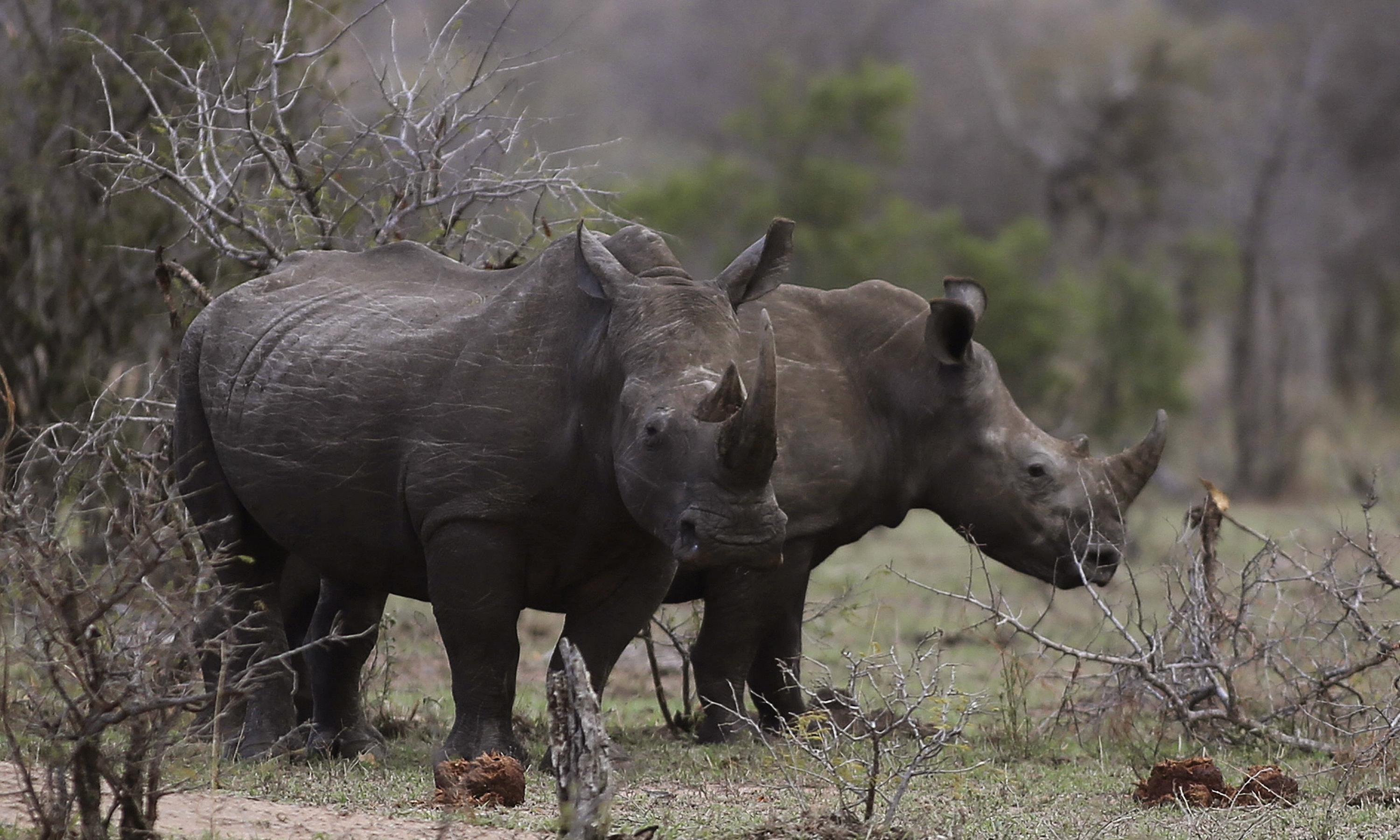 Rhinoceros horn online auction: few buyers after outraged protests