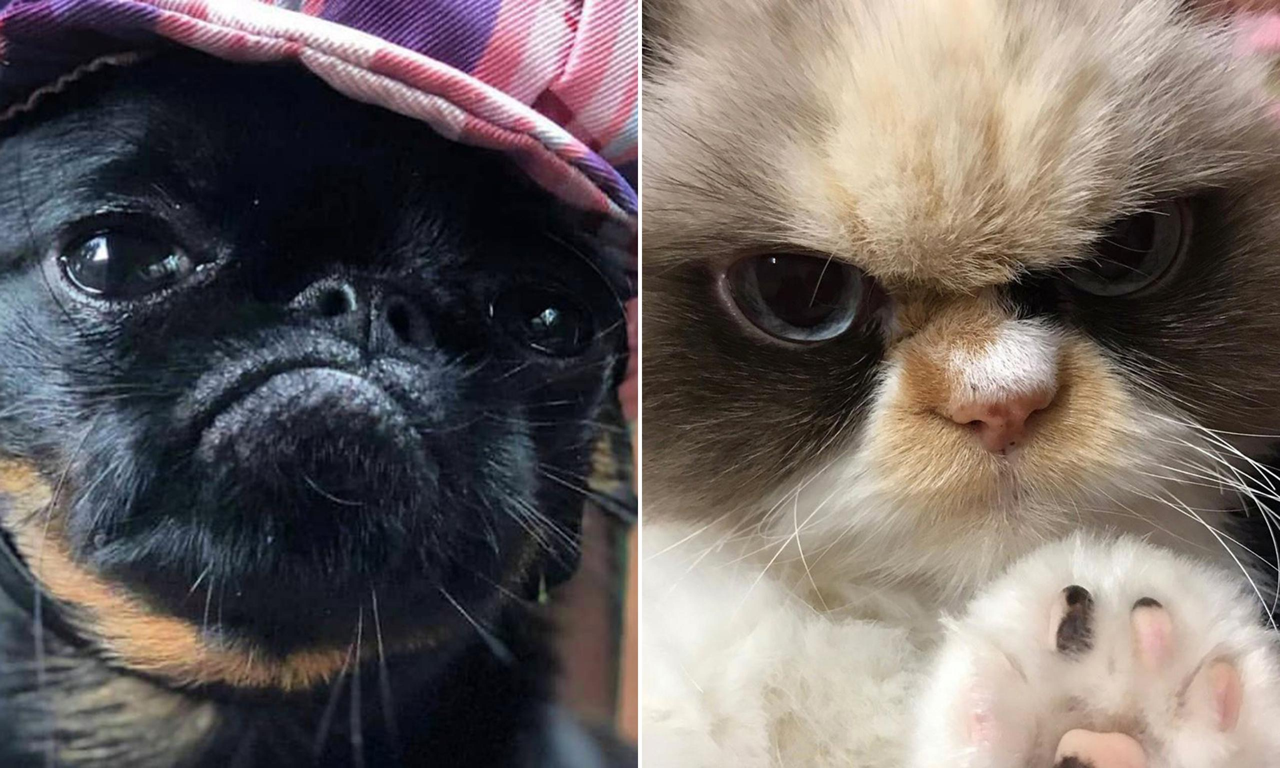 Reigning cats and dogs: why grumpy animals rule the internet