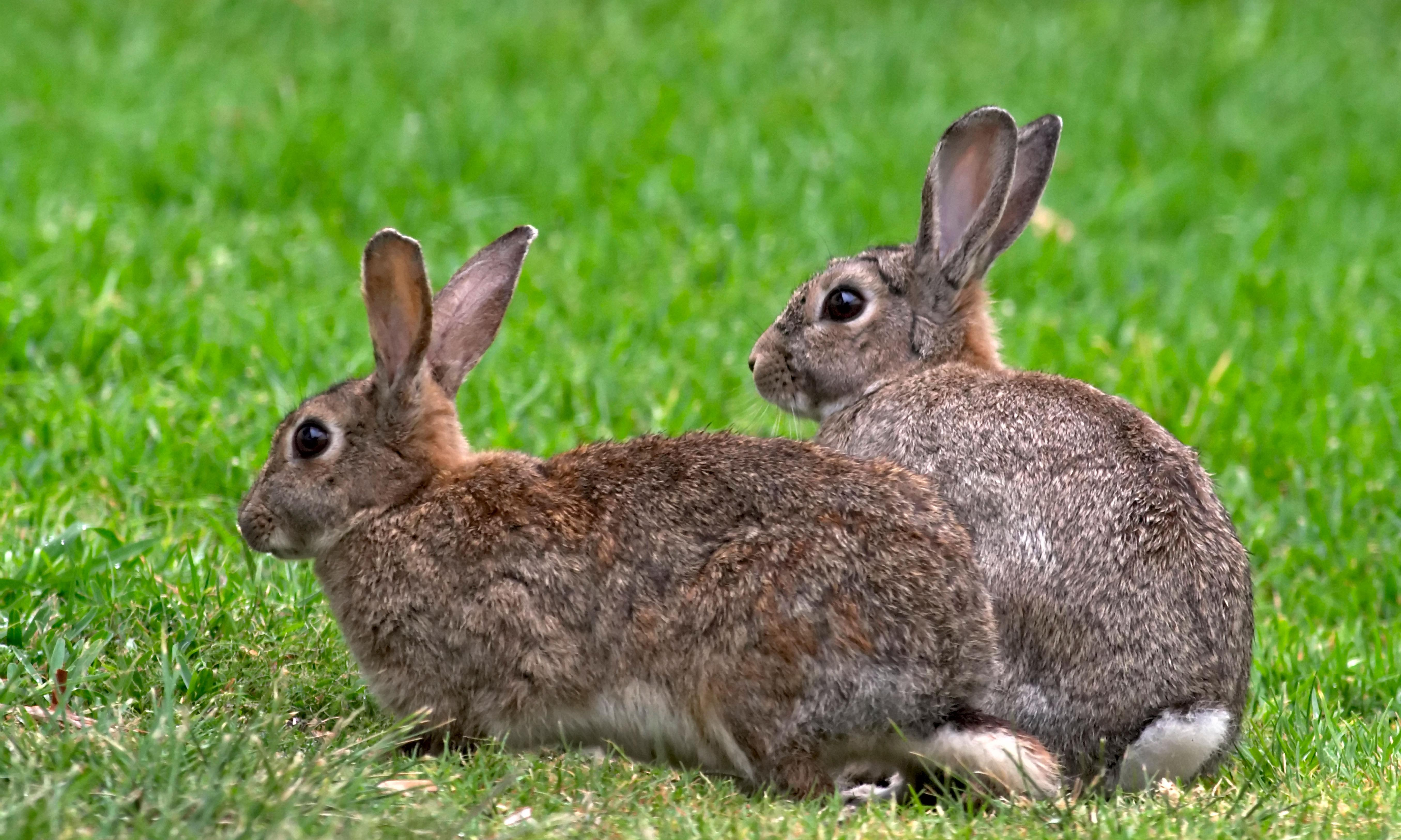 Rabbits may hold key to solving mystery of human female orgasm