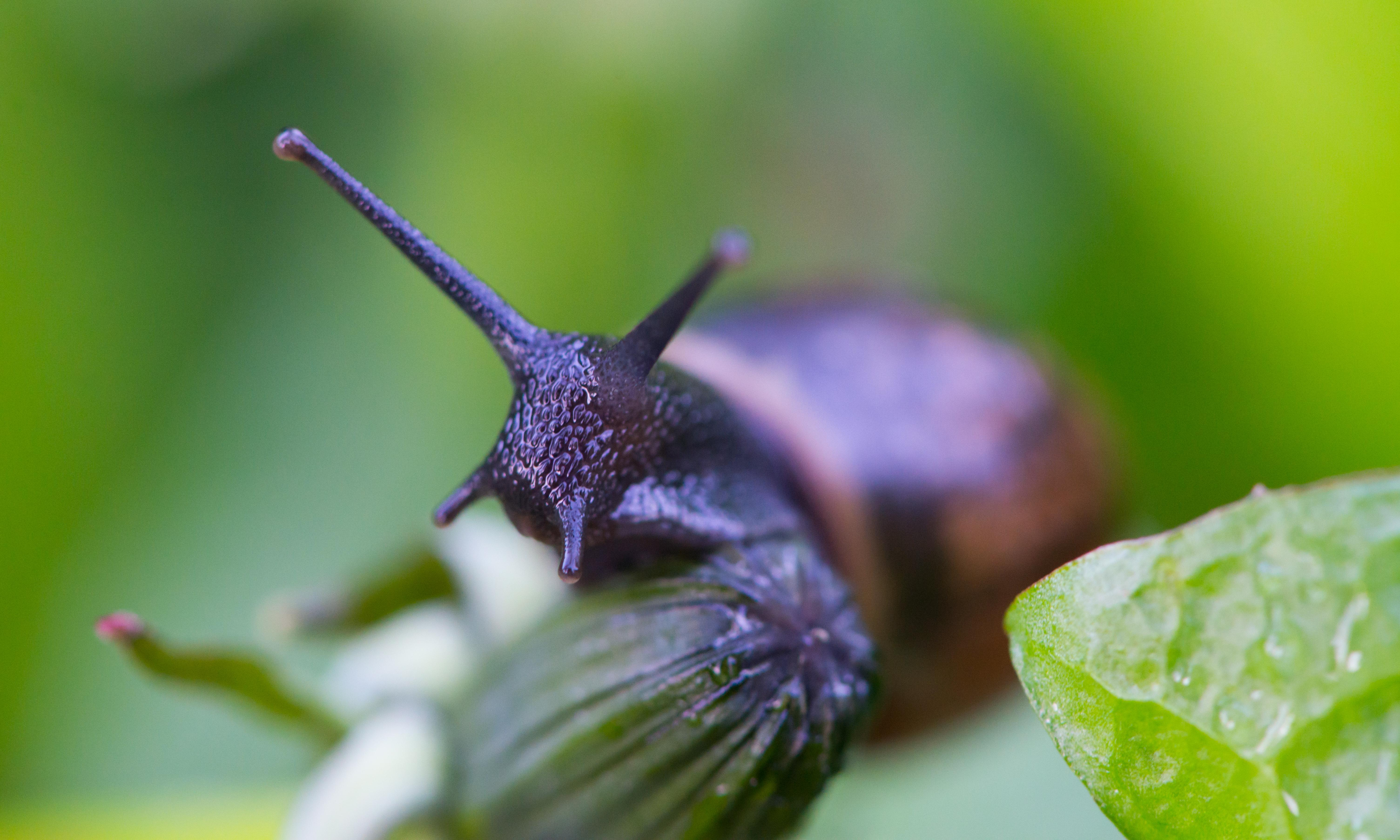 Say goodbye to slugs, snails, mice and badgers