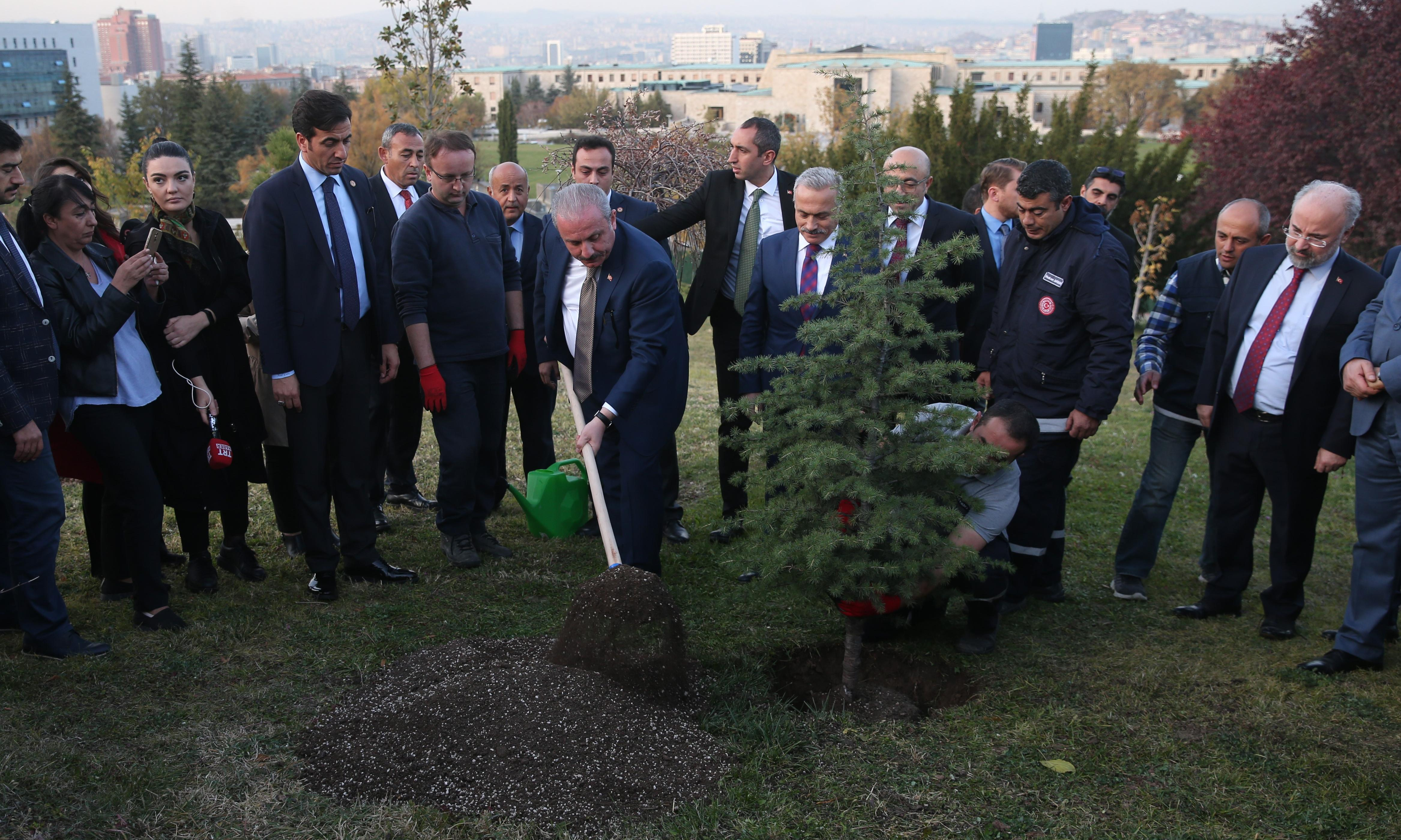 Most of 11m trees planted in Turkish project 'may be dead'