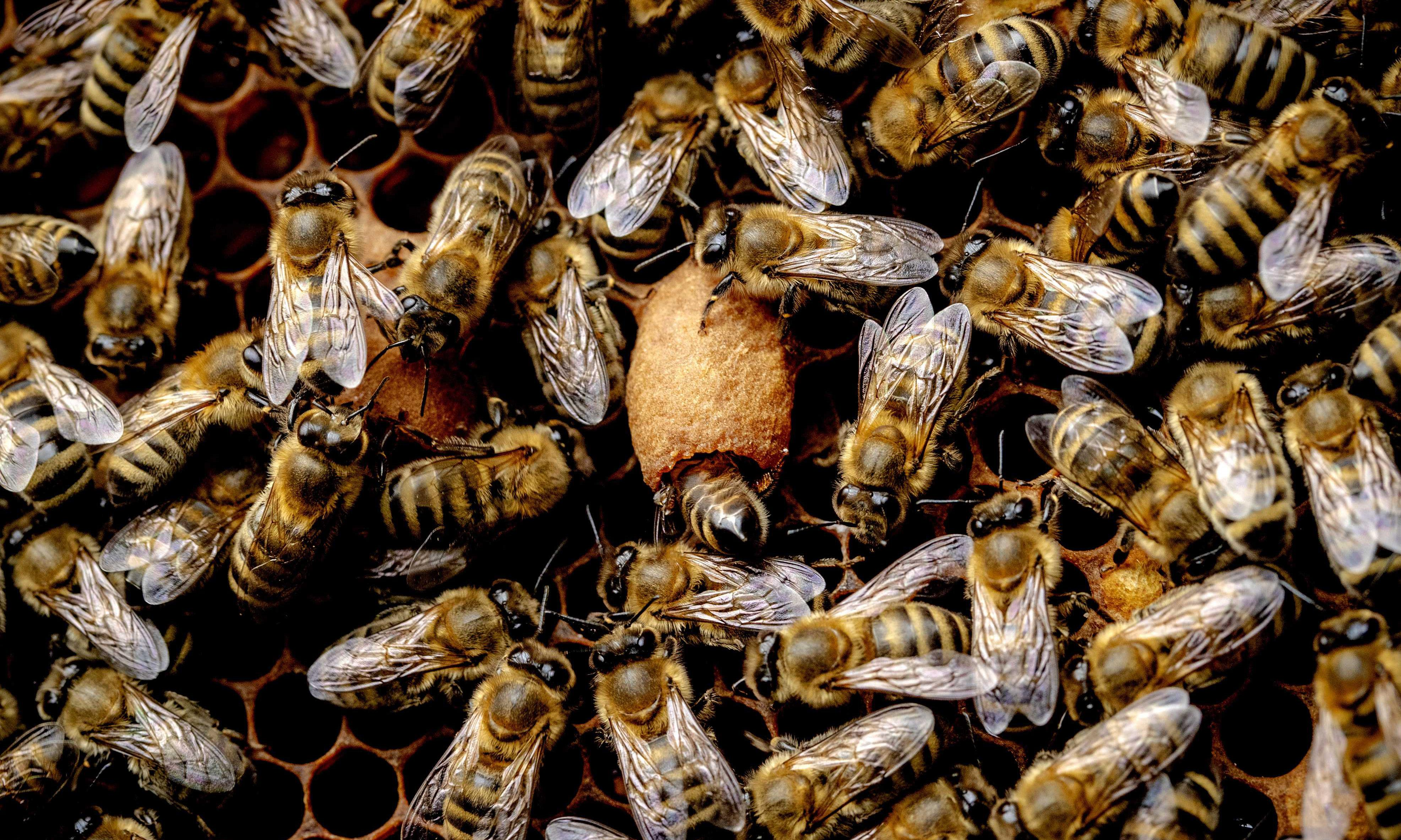 Pesticide widely used in US particularly harmful to bees, study finds