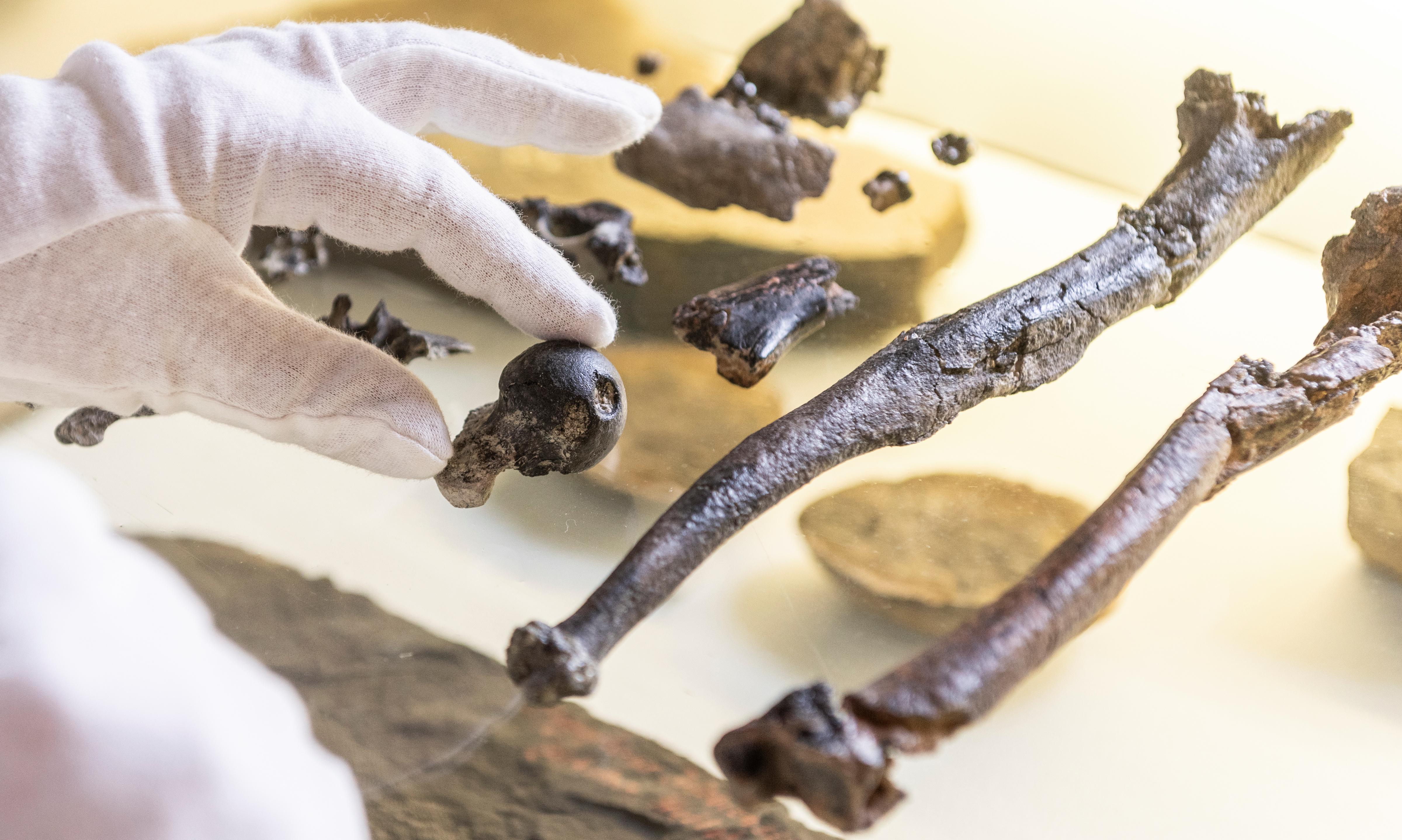 Bones of ape living 12m years ago point to genesis of upright walking