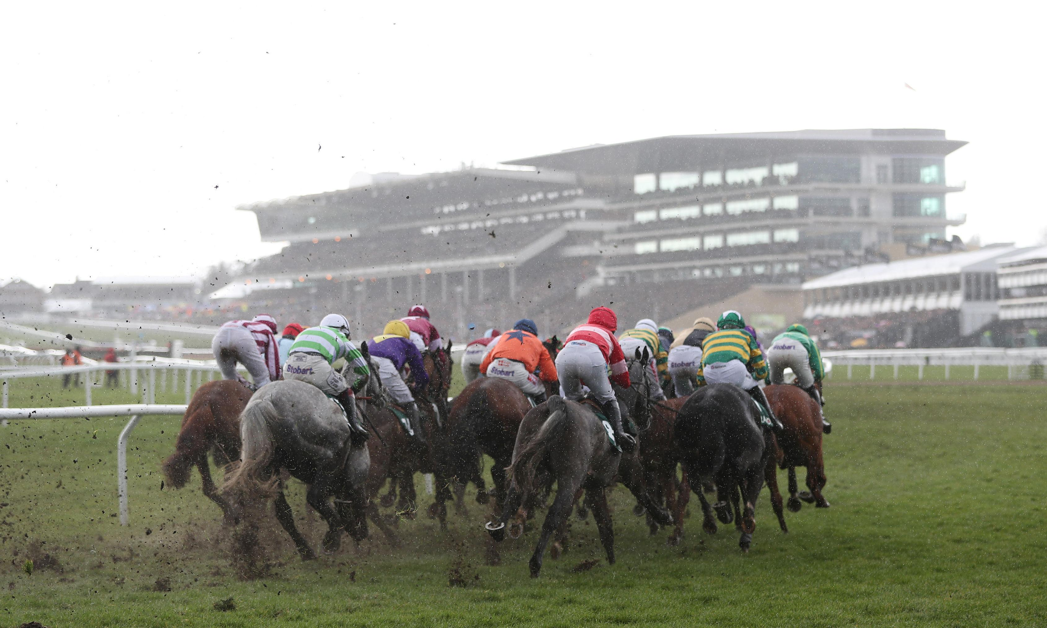 Talking Horses: horse welfare is an issue for racing and not just the BHA