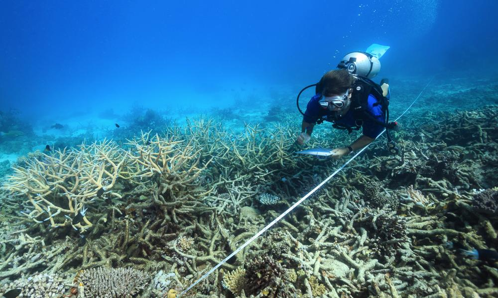 A scientist measures coral mortality in October 2016 following bleaching on the northern Great Barrier Reef.