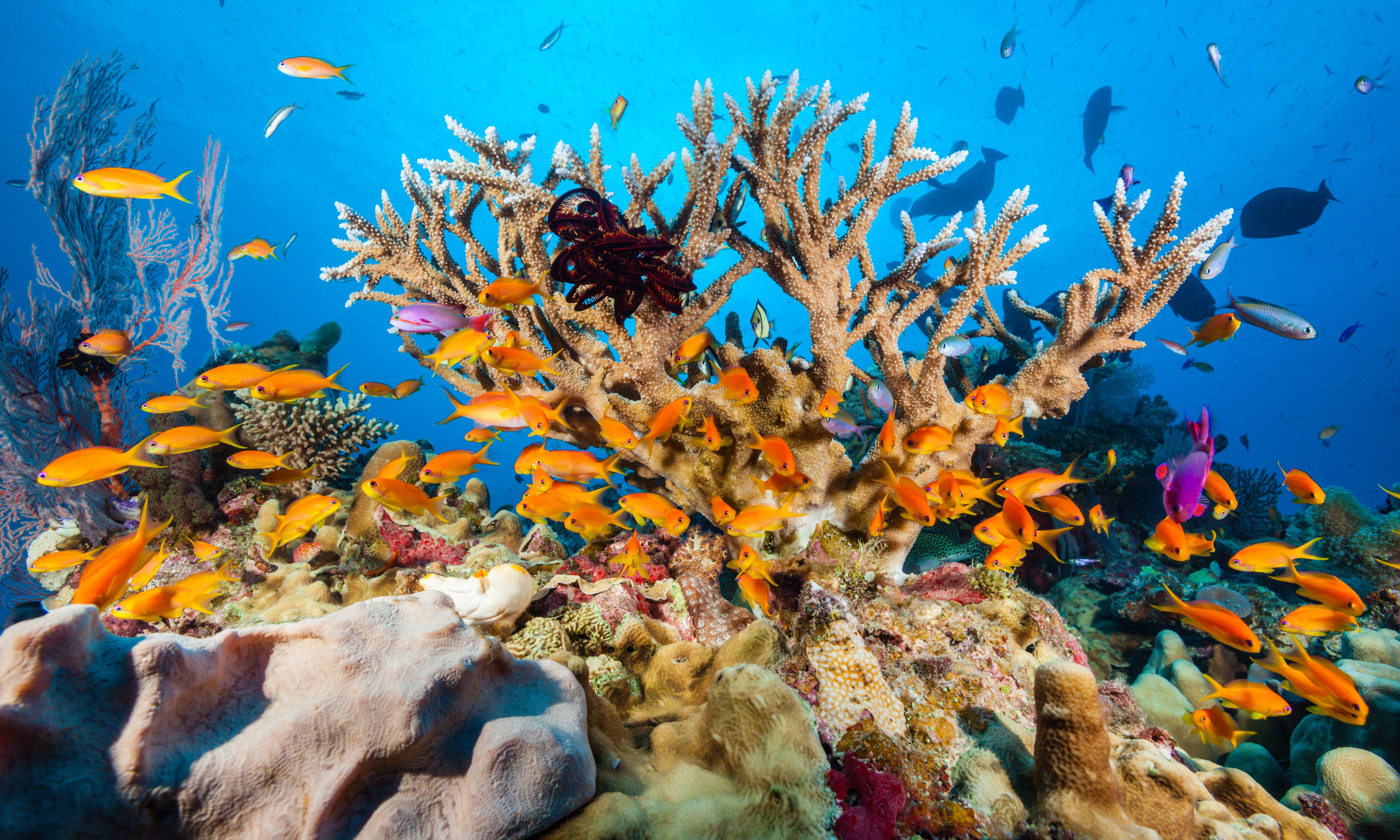 P&O cruise ship dumped 27,000 litres of waste on Great Barrier Reef, Senate hears