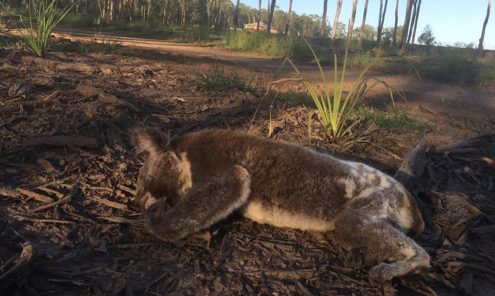 Australia's climate and extinction crises are crying out for political solutions