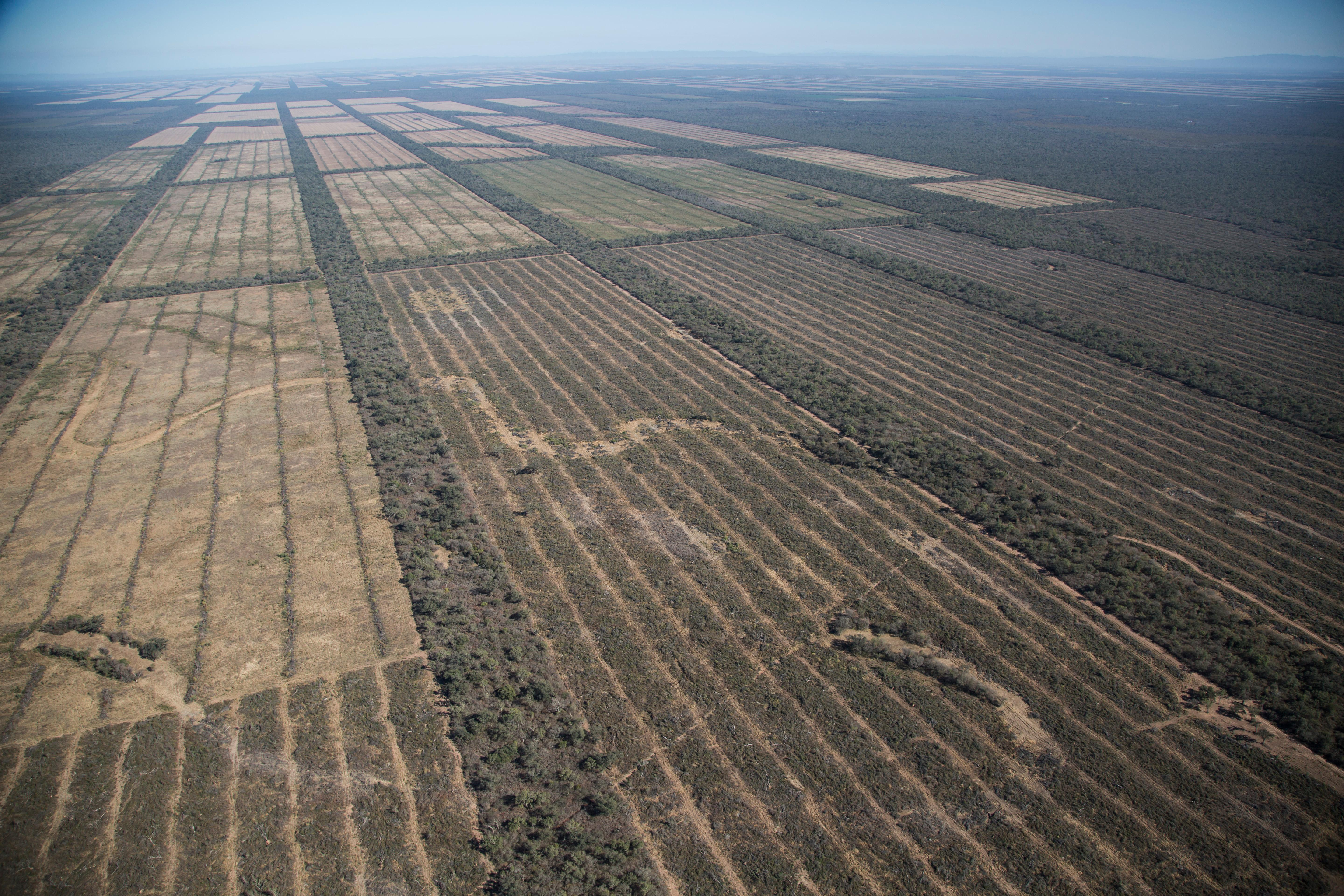 Soy destruction in Argentina leads straight to our dinner plates