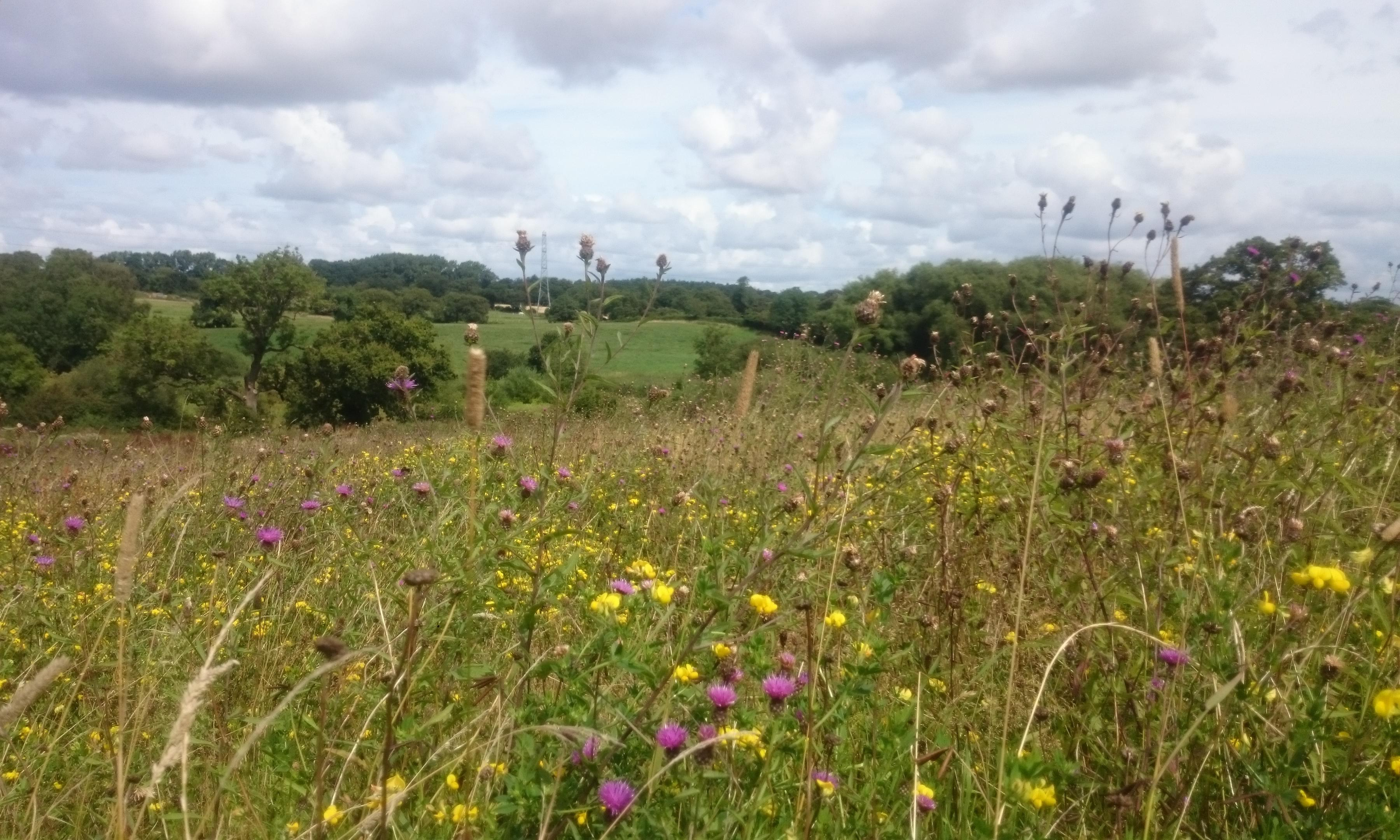 Country diary: a thoroughly modern meadow