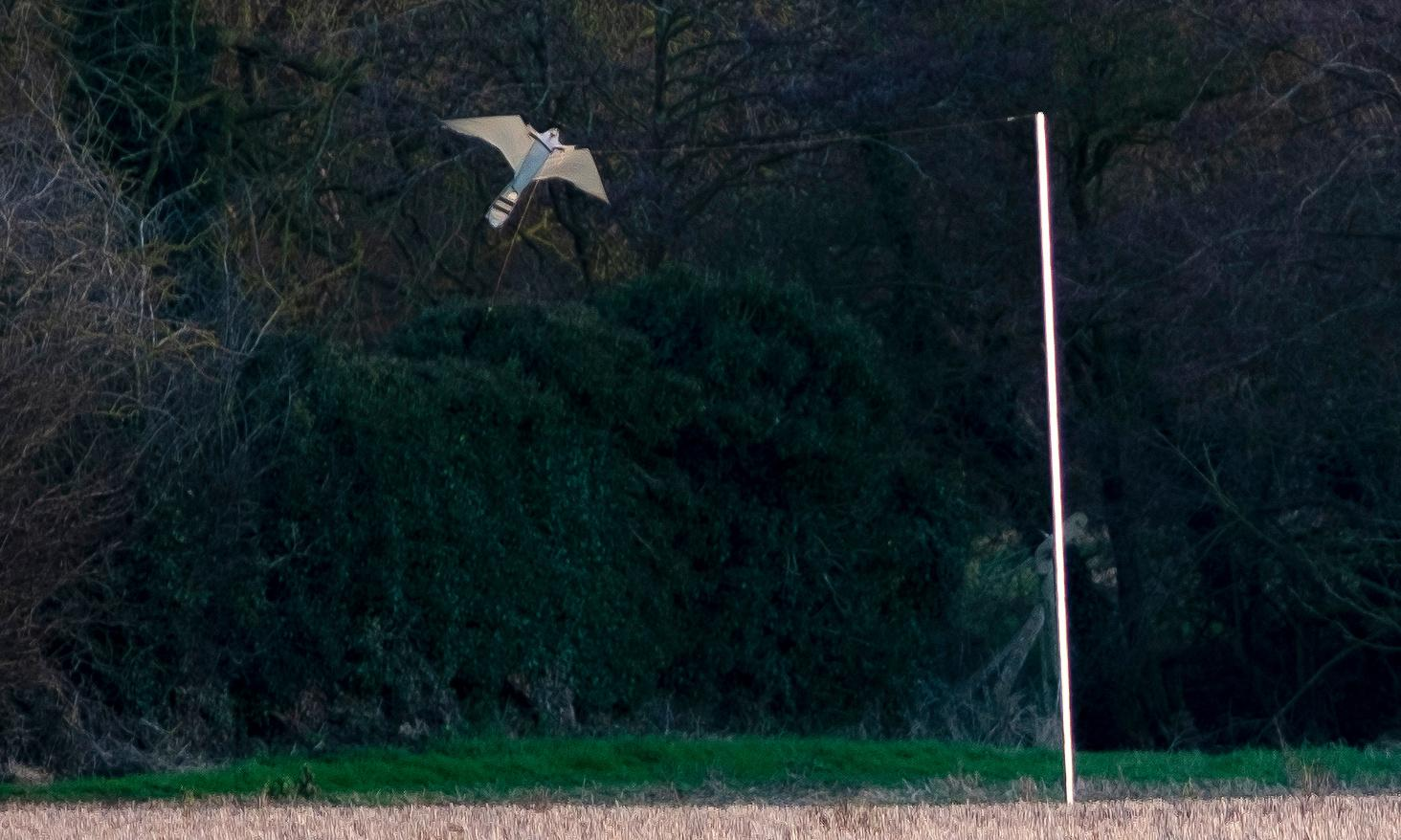 Country diary: the psychology of seeing off those thieving pigeons