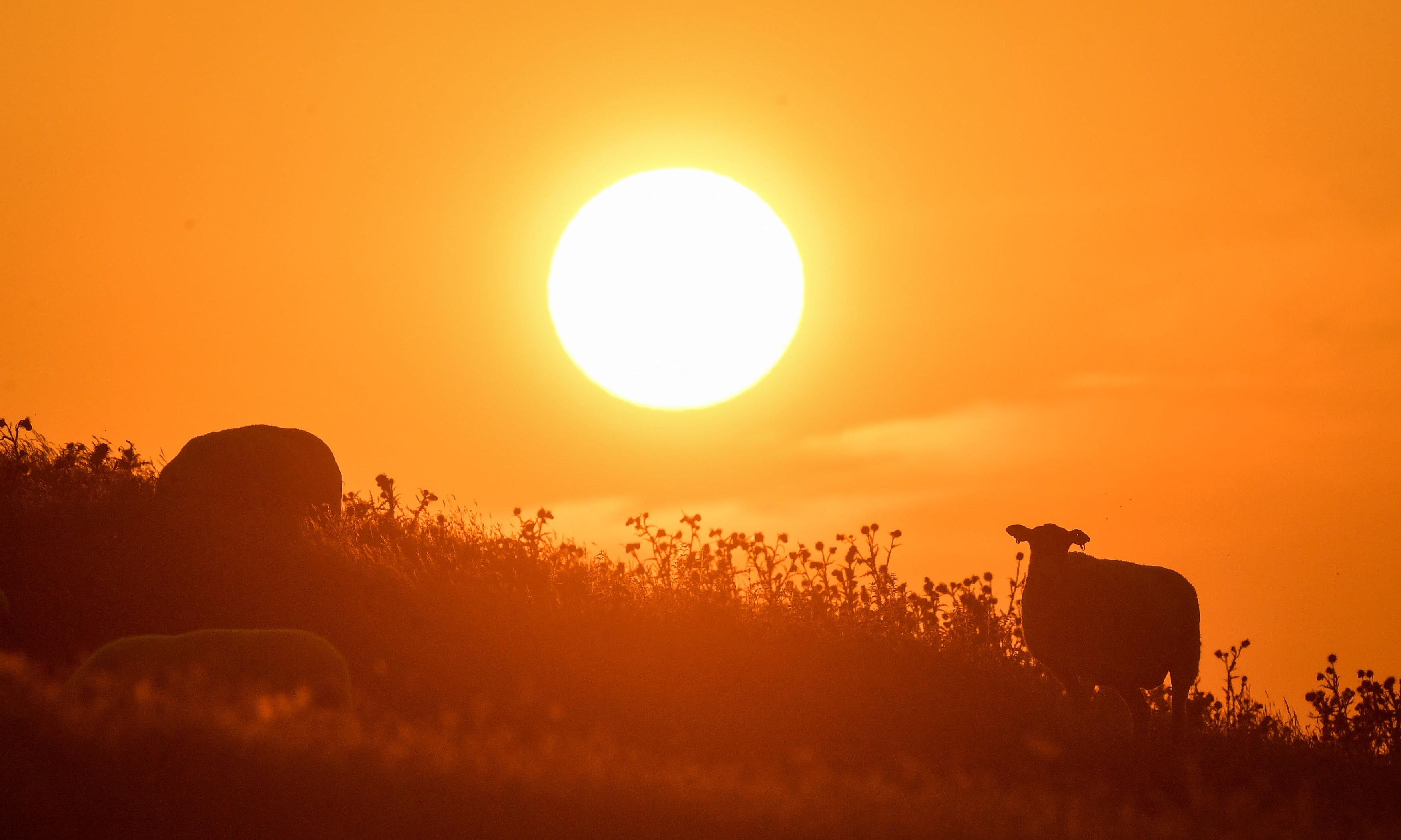 UK's hottest recorded day 'caused deaths of extra 200 people'