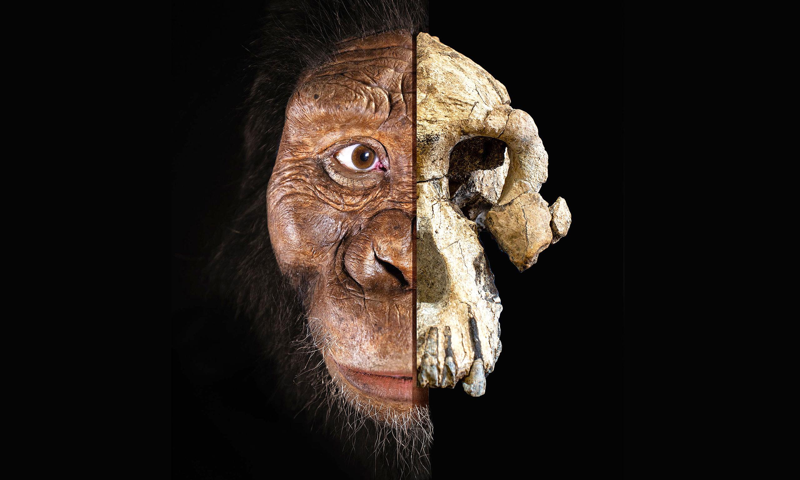 Skull of humankind's oldest-known ancestor discovered