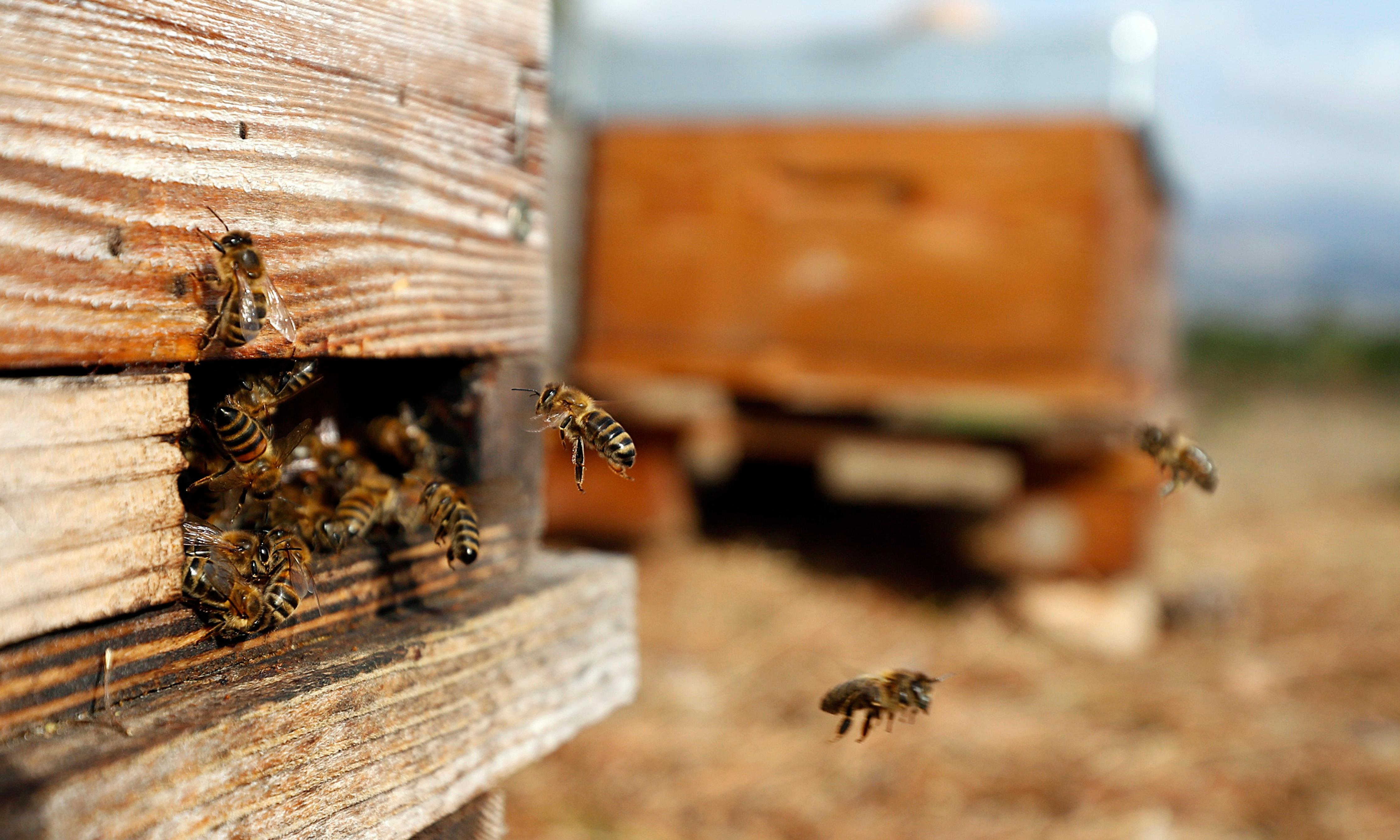 Hive heists: why the next threat to bees is organized crime