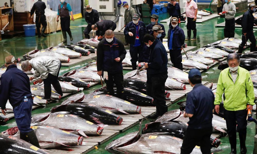 Wholesalers check the quality of fresh tuna displayed during the tuna auctions, amid the coronavirus disease (COVID-19) outbreak, at Toyosu fish market in Tokyo, Japan August 25, 2020.
