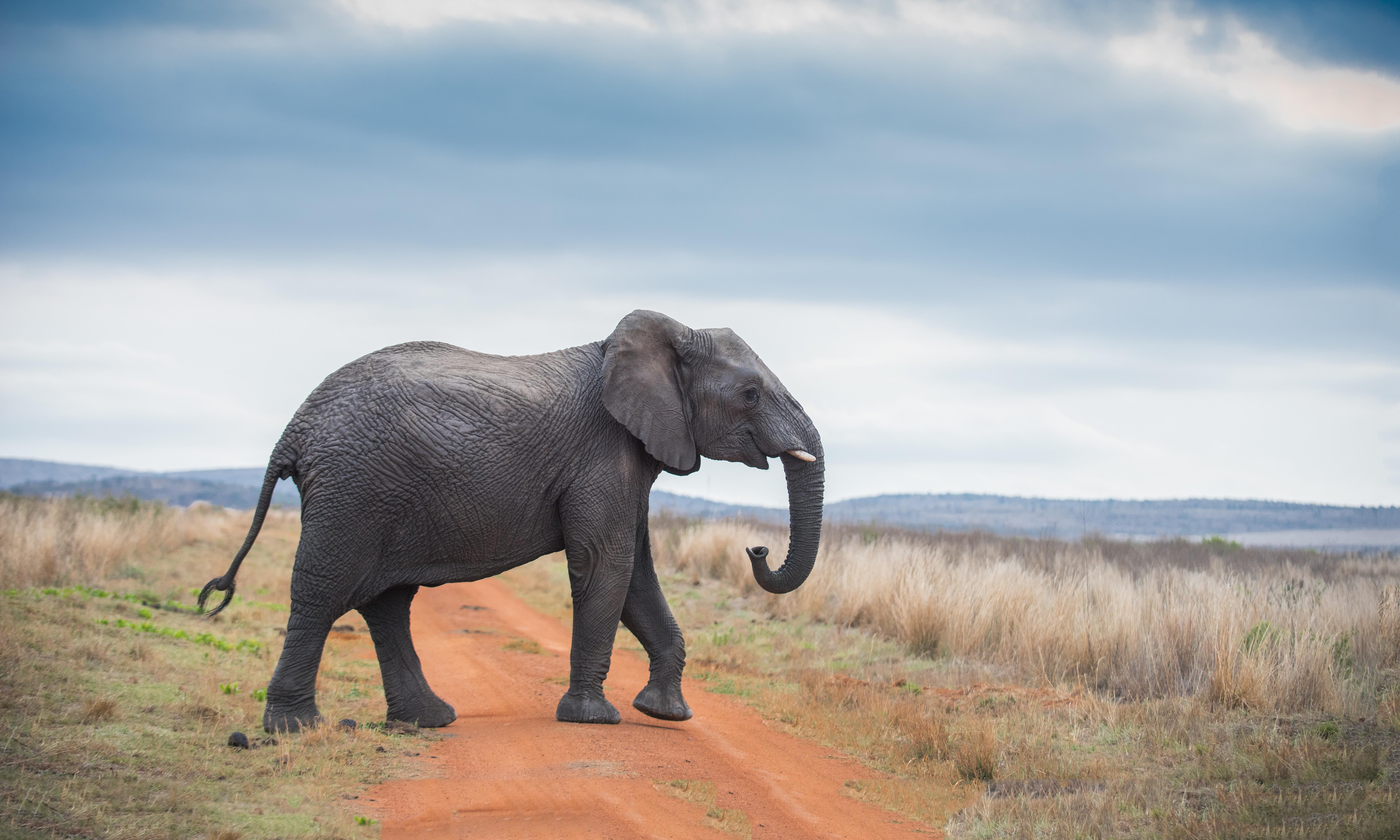 Surus was said to be whose last elephant? The Weekend quiz