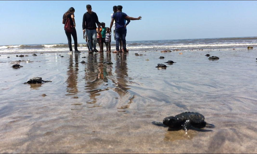 Mumbai beach goes from dump to turtle hatchery in two years