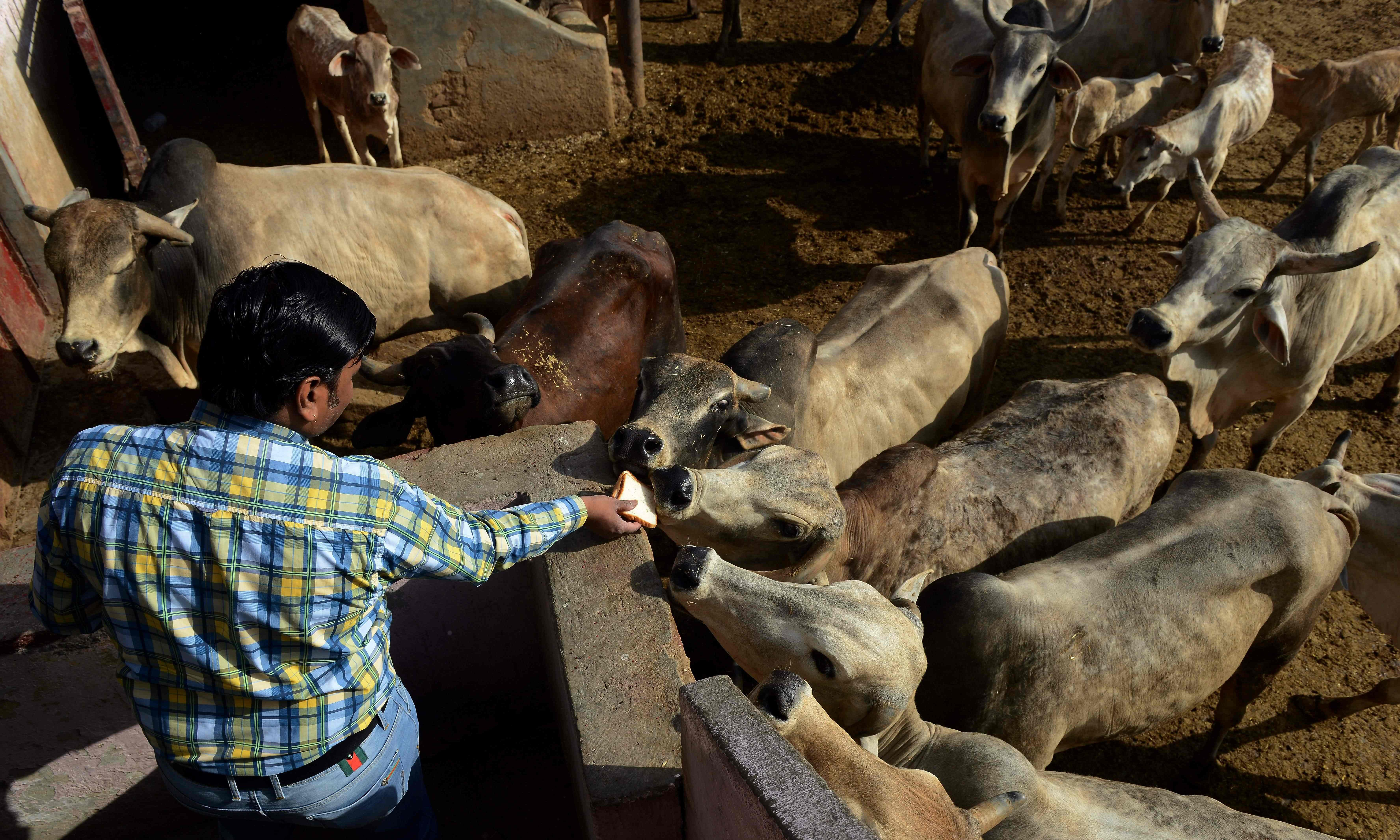 Indian mob beats two Muslims to death over suspected cow theft